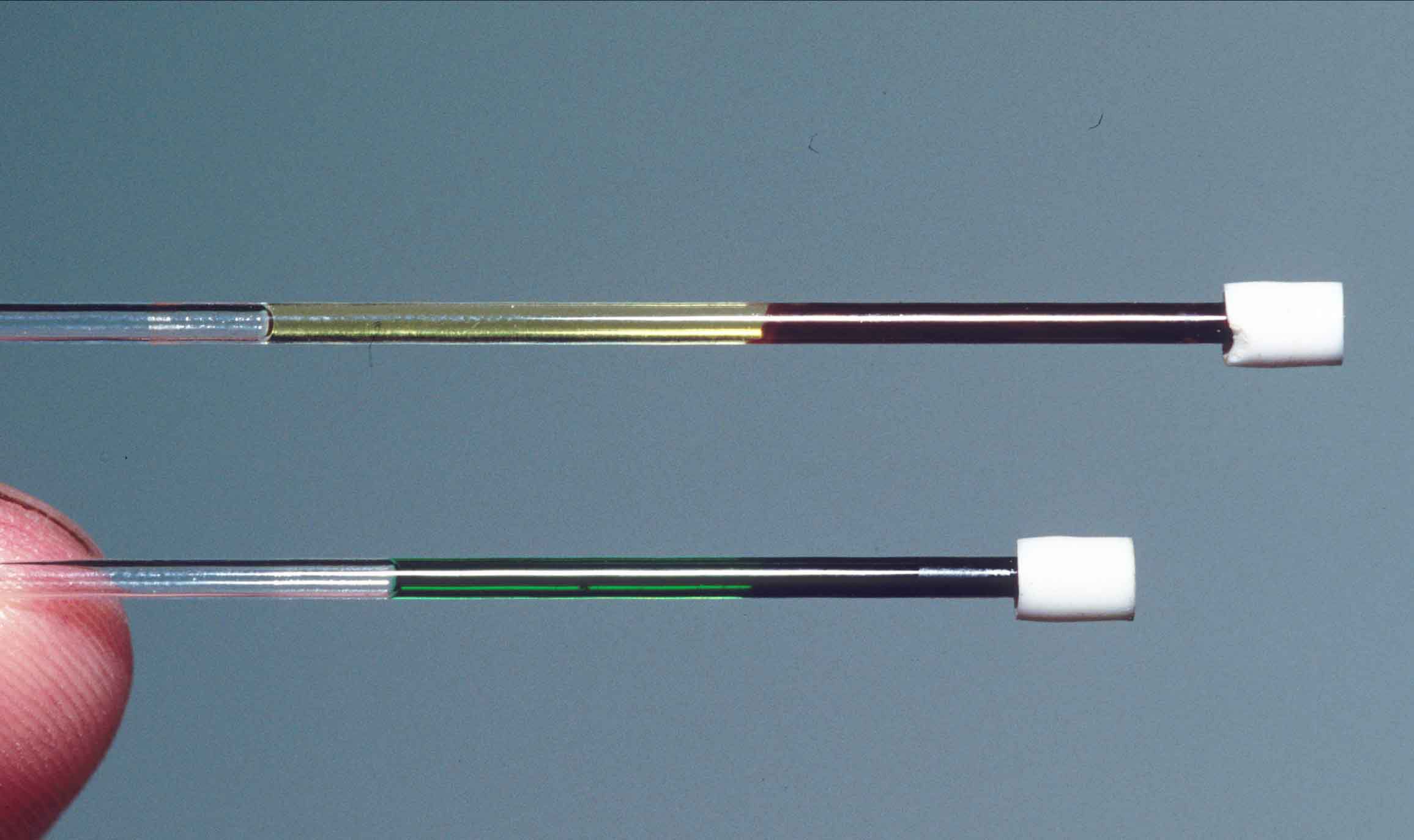 """In this image, one tube (top) shows a blood sample from a regular red-blooded lizard from New Guinea ( Lamprolepis smaragdina ). The other tube (bottom) reveals the bright green blood of  Prasinohaema . The bile in this blood could kill other species, but  Prasinohaema  handles it just fine. Credit: Chris Austin, LSU."""""""