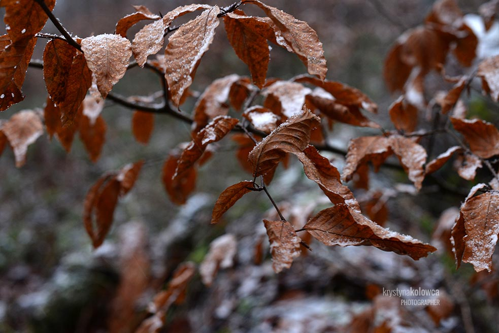 kolowca-bieszczady-winter.jpg