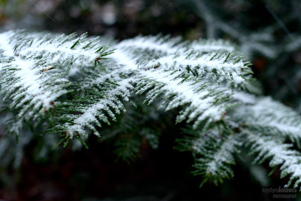 kolowca-bieszczady-winter-I.jpg