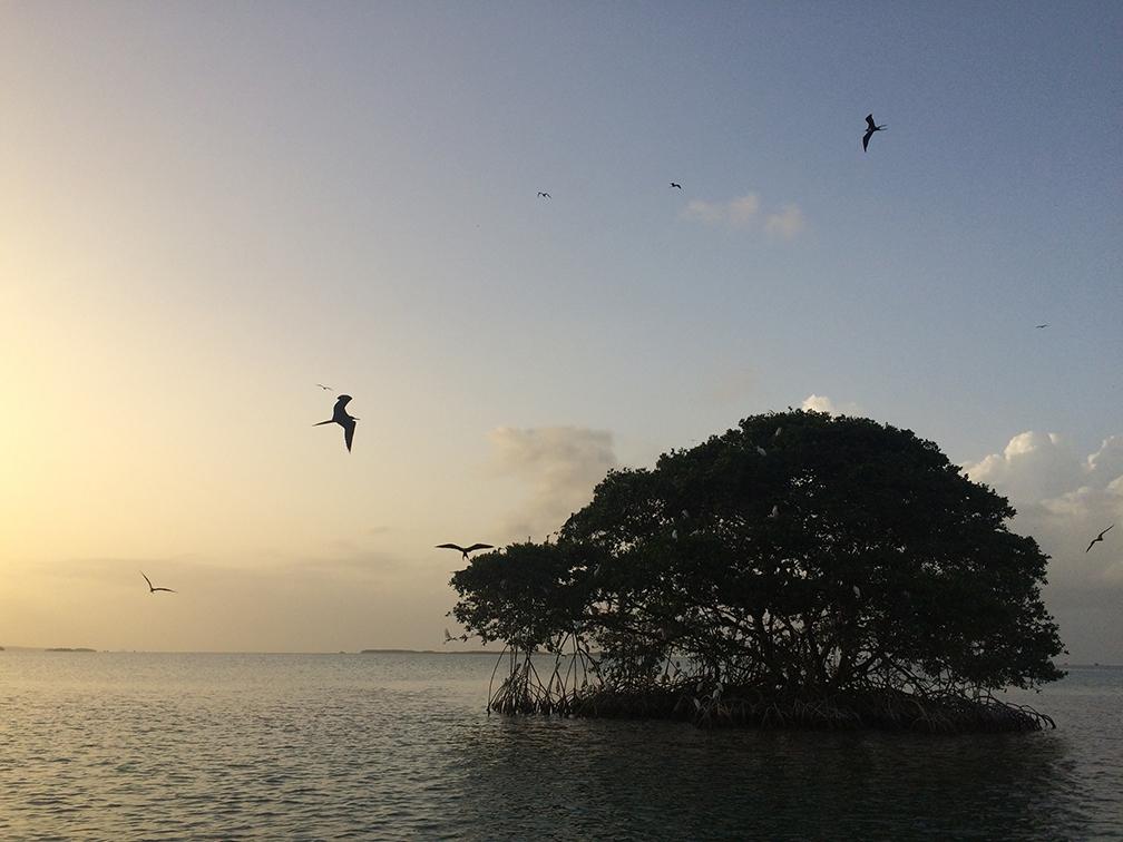 GUADELOUPE - mangrove tour