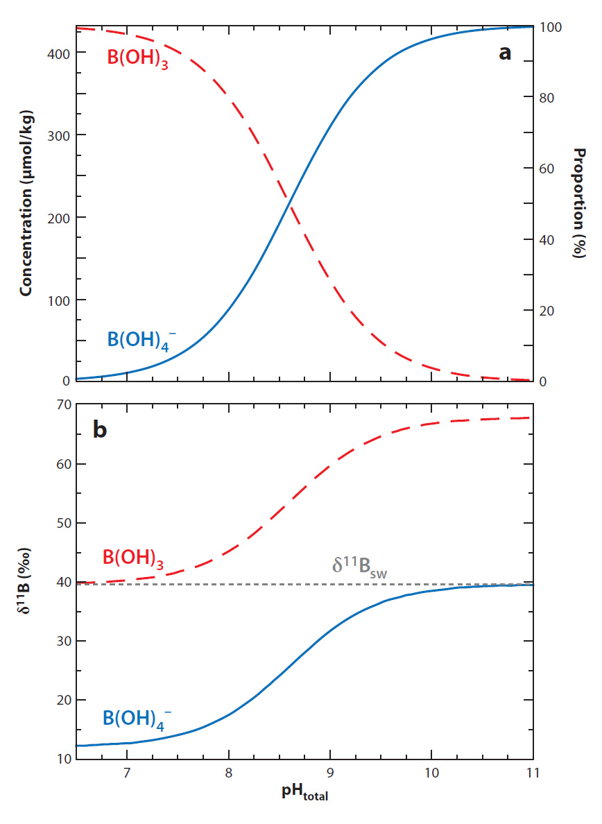 Variation in abundance (a) and isotopic composition (b) of borate ion (B(OH)4-) and boric acid (B(OH)3) in seawater.