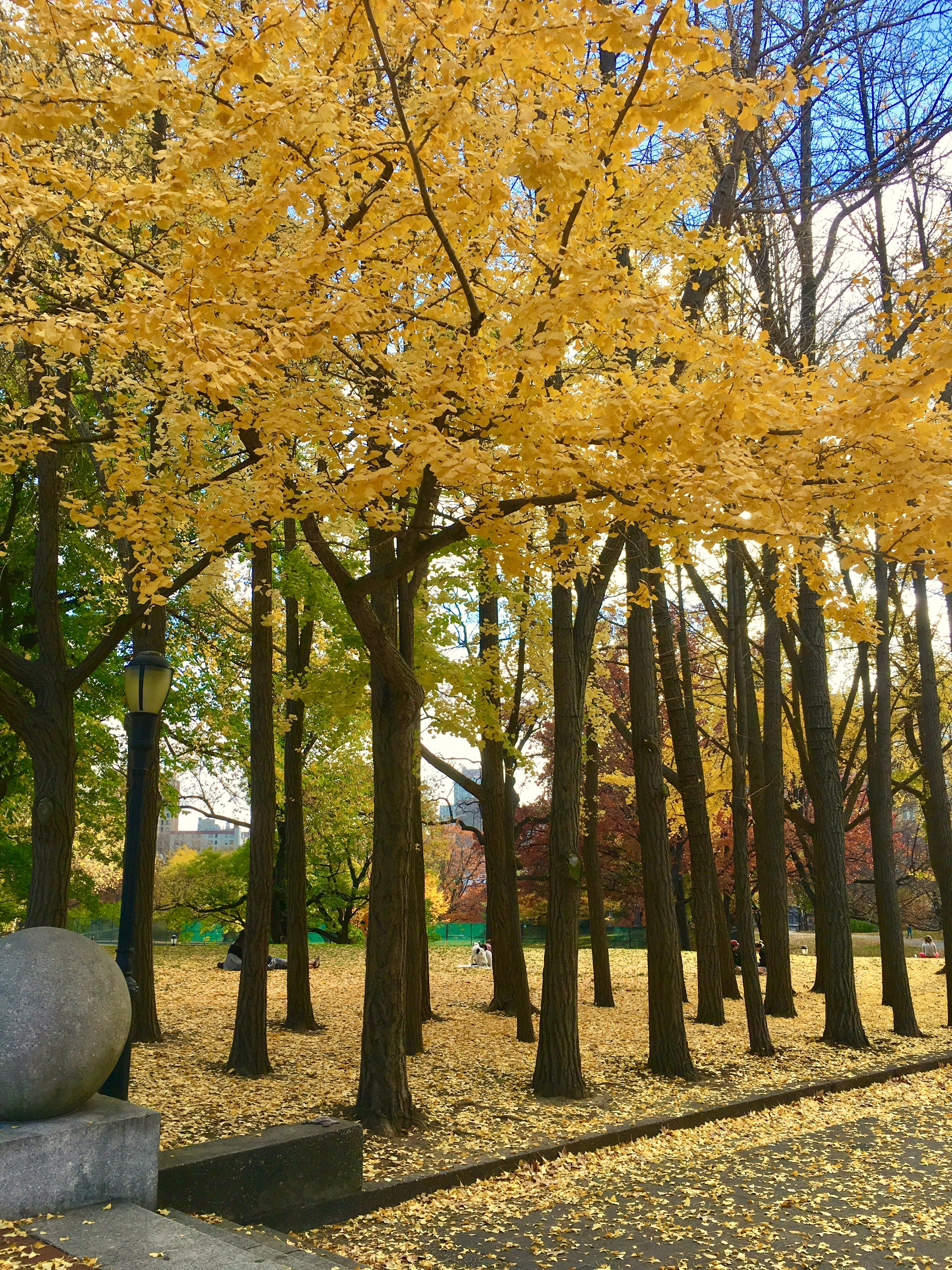 Yellow Forest .jpg