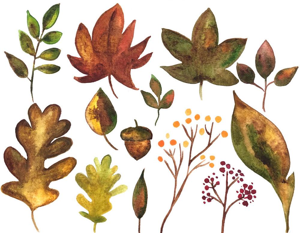 watercolor-leaf-post-olive-blossom-designs.jpg