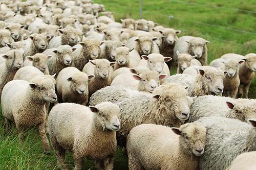 herd_mentality-small.jpg