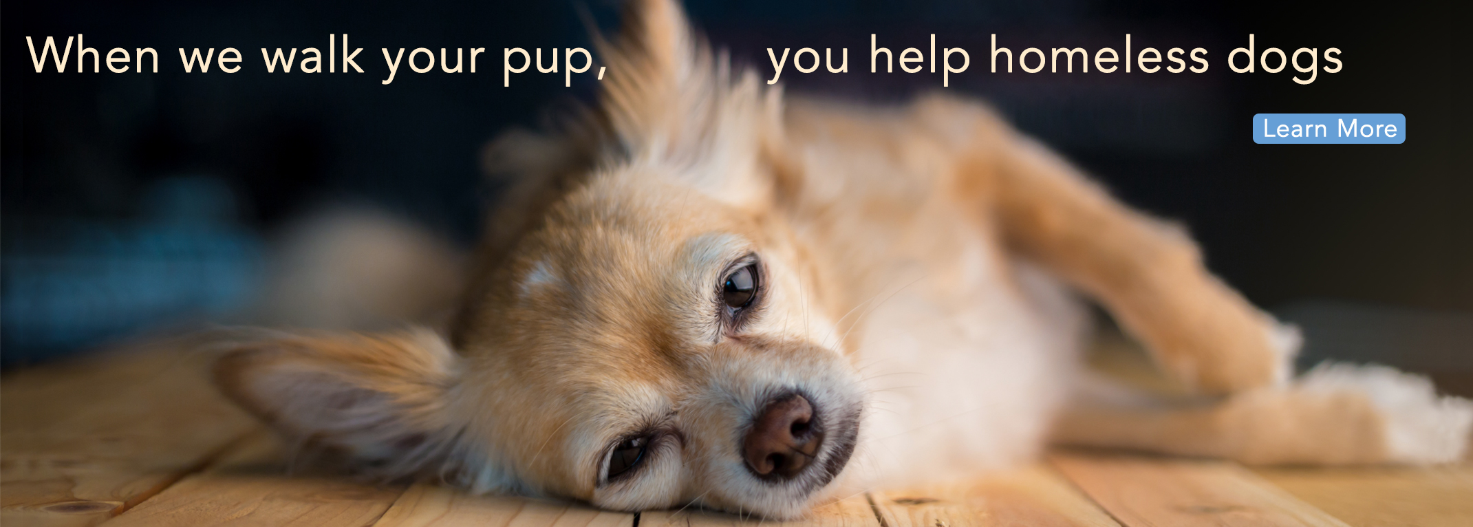 Home page banner chihuahua 3.jpg