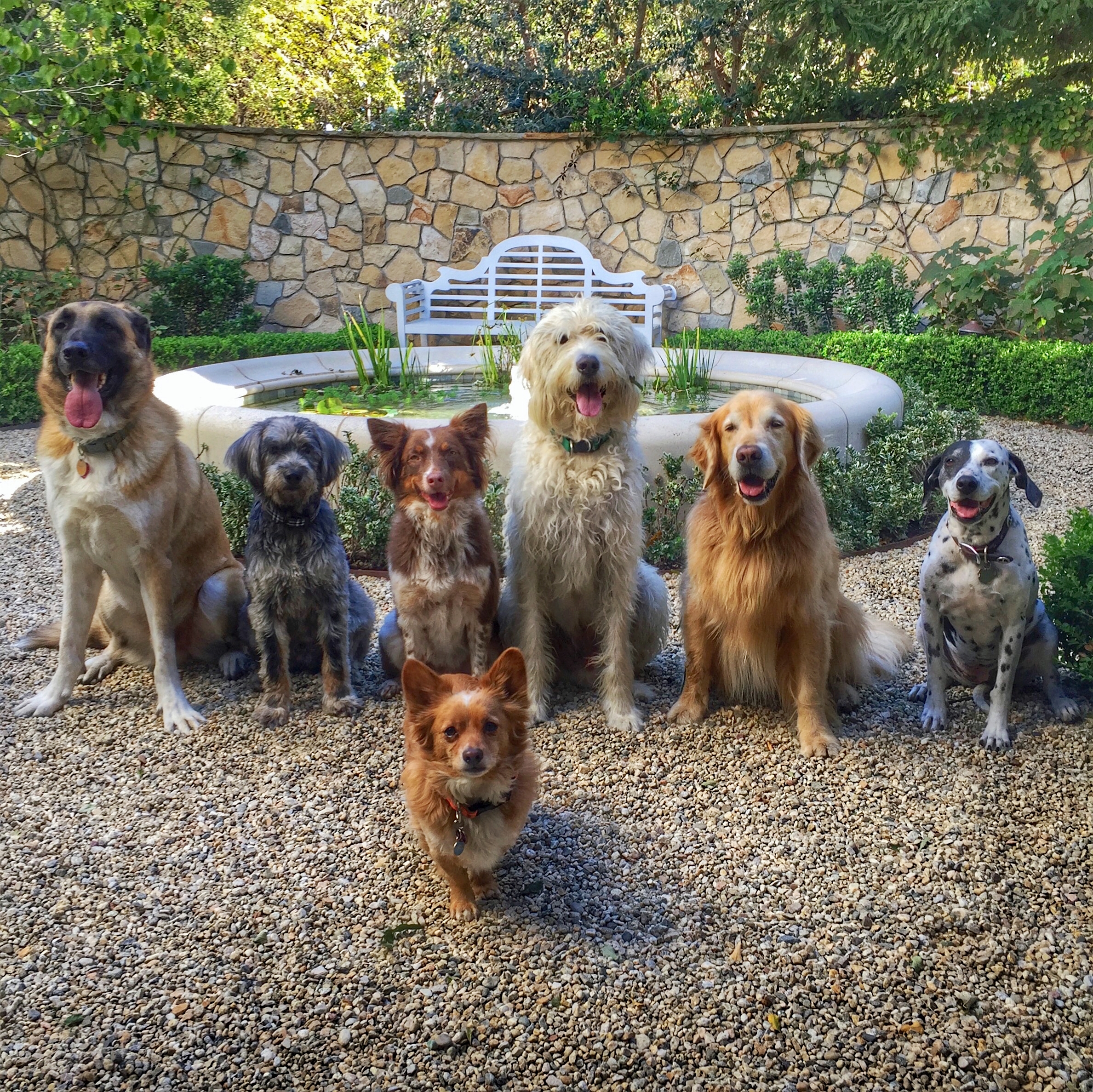 Left to Right: Chavo, Jagger, Pasha, Mr Fox, Jack, Bosco & Zara