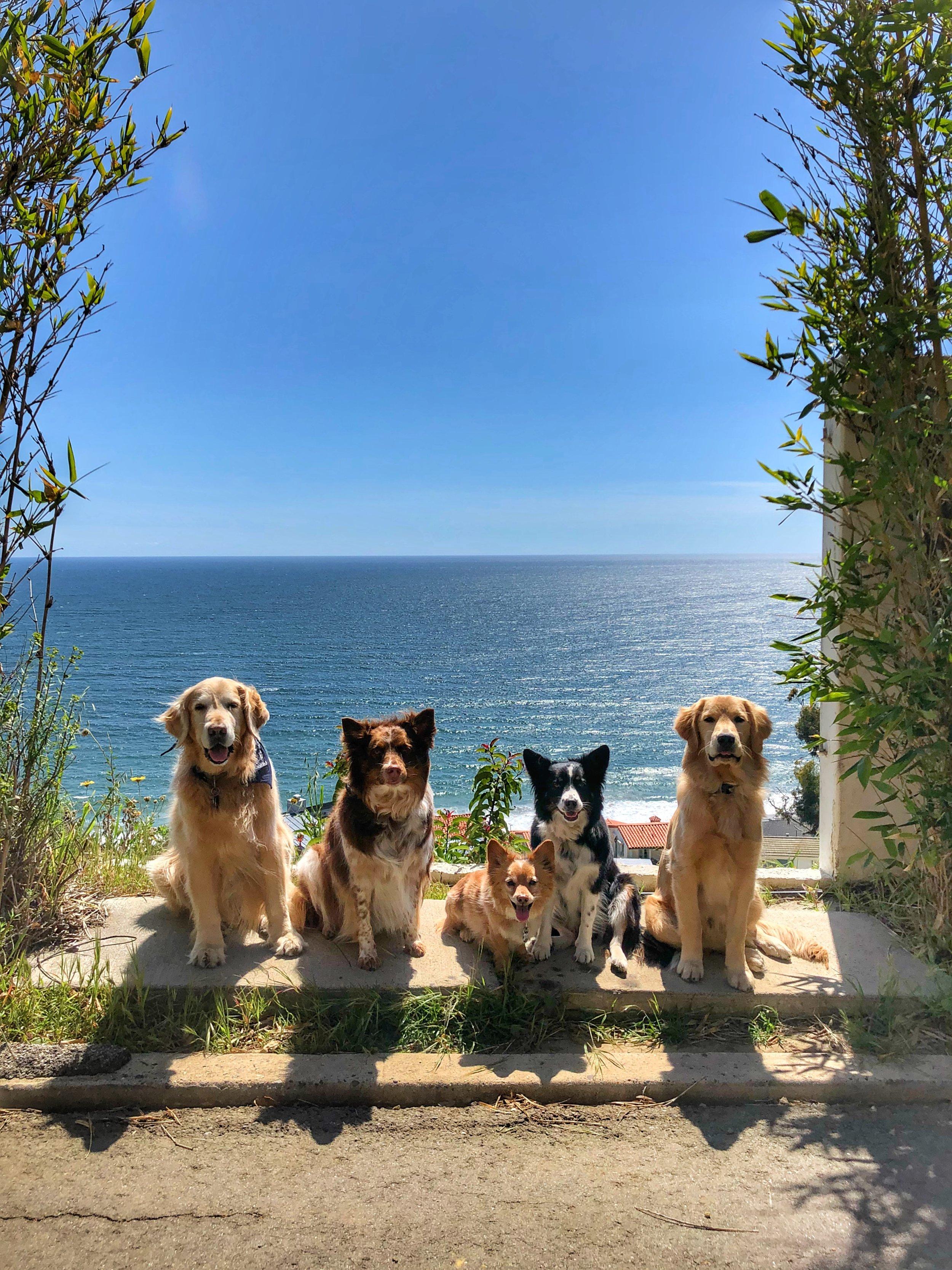 L to R: Bosco, Pasha, Mr Fox, Pepper, Loki 🐾