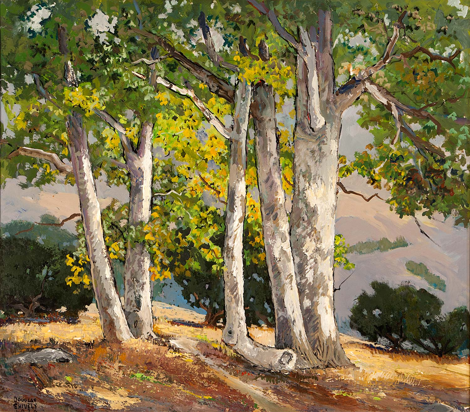 """""""Sycamores"""" by Douglas Shively"""