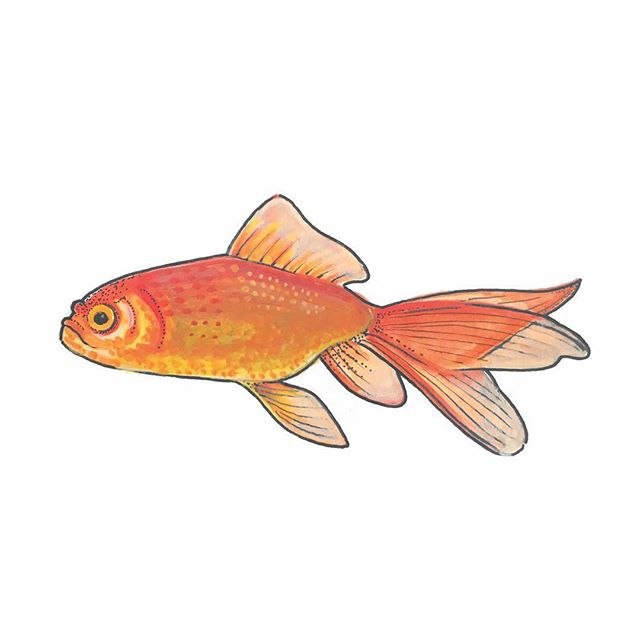 Been doing some water coloring lately . . . . . #goldfish #fish #water #watercolor #orange #artist #philadelphia #phillyartist #aquarelle #art #fineart #illustration #aquarelas #aquarela #graphic #drawing