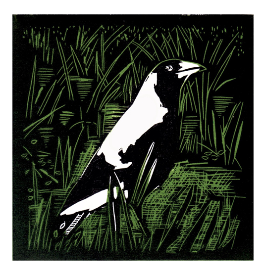 magpie in grass.jpg
