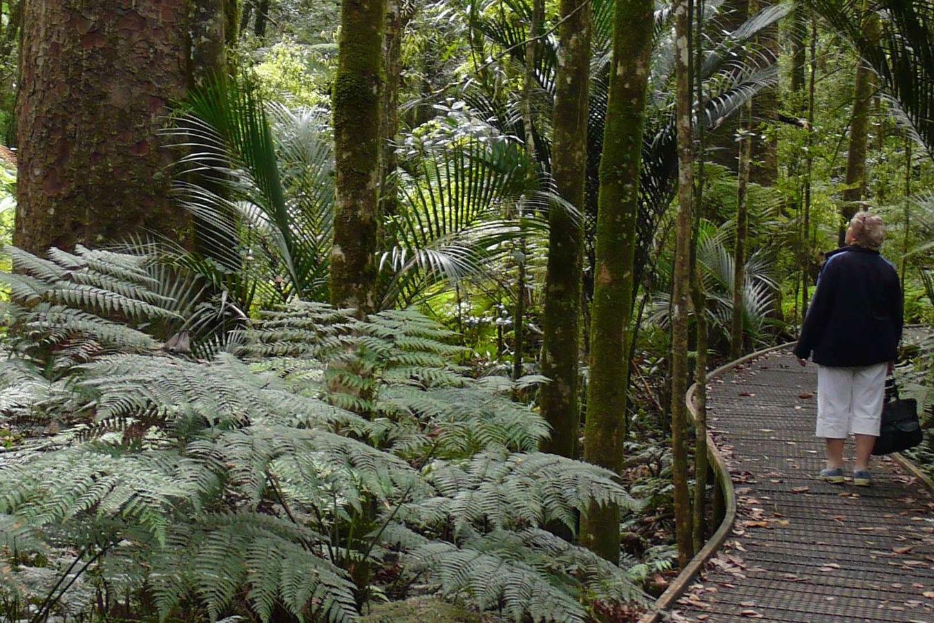 Kauri-Forest-Bay-Of-Island-Tours-H36-photo-credit-NorthlandNZ-com-1-2.jpg
