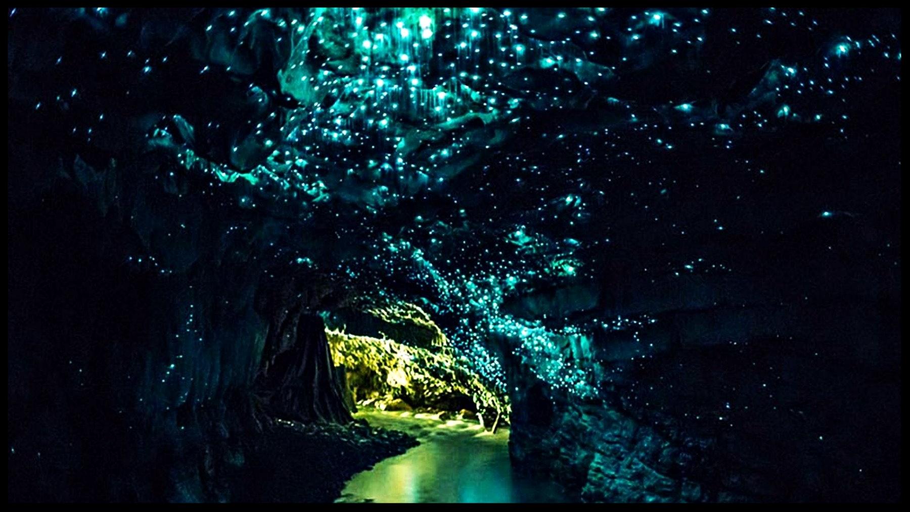 waitomo-caves.jpg