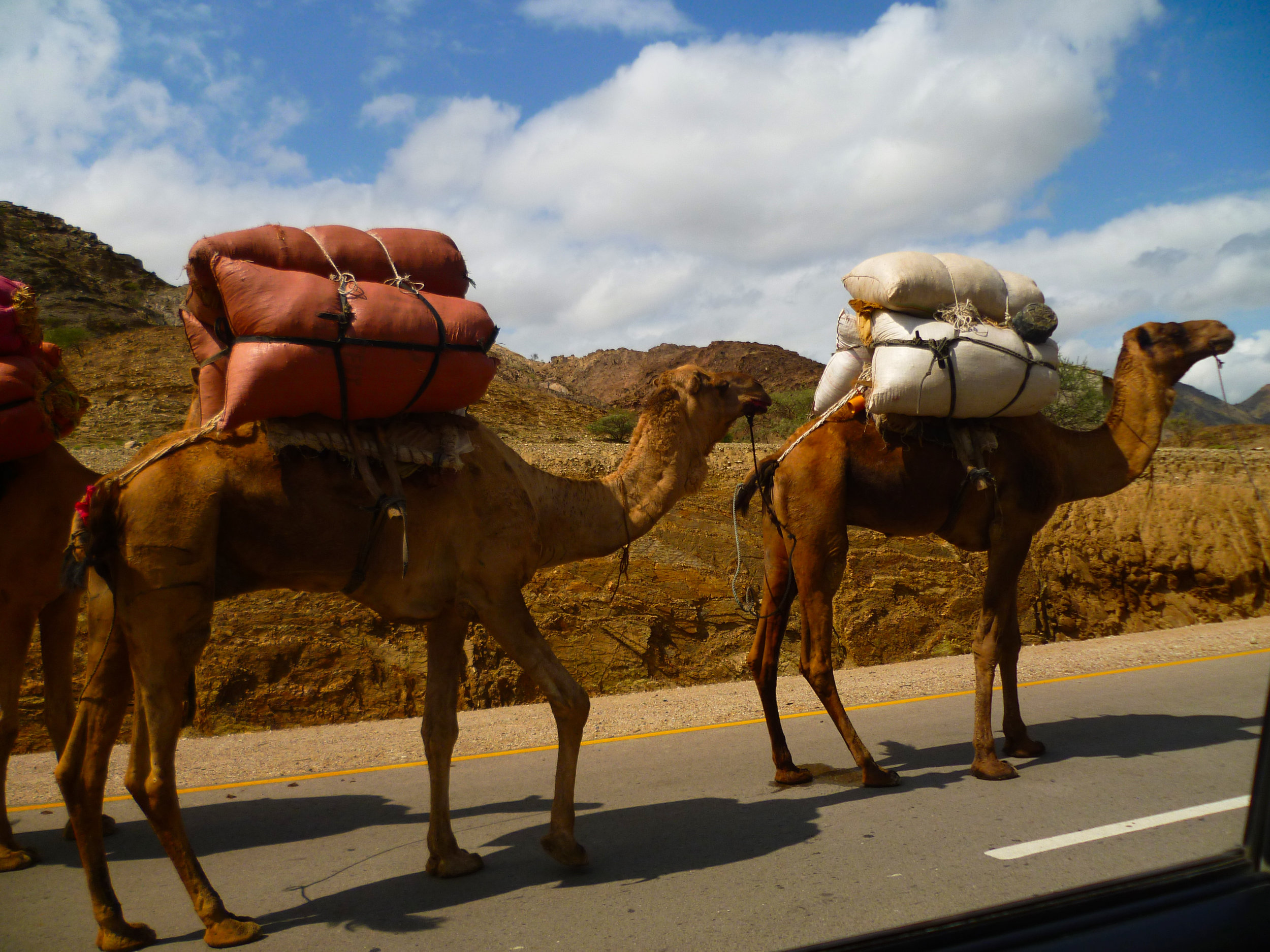 Window camels as we continue to travel north...