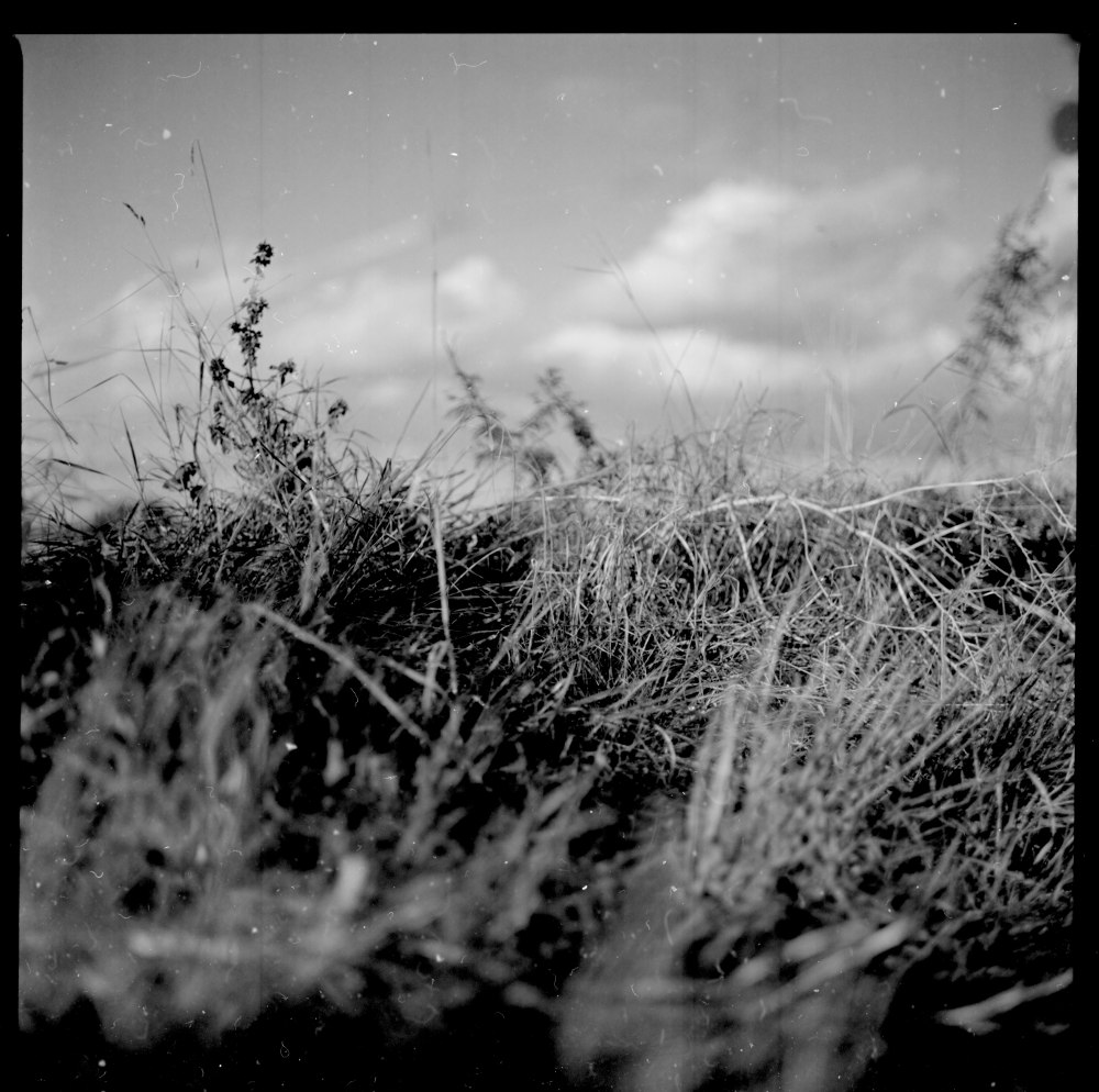Grass - hand developed Caffenol negative