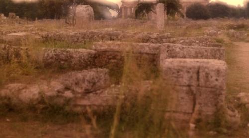 Paestum 11   - Medium Format photograph . William McDonald - 2011.