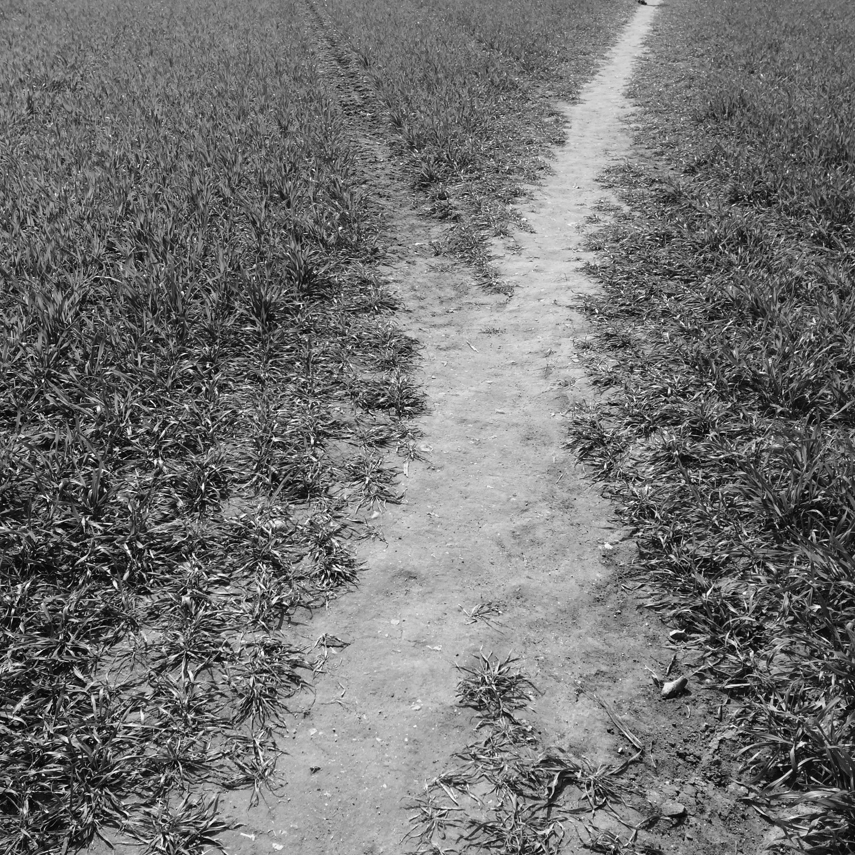 paths 6(1).jpg