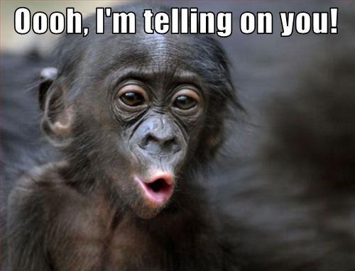 """baby monkey with caption saying """"Oooh, I'm telling on you!"""""""