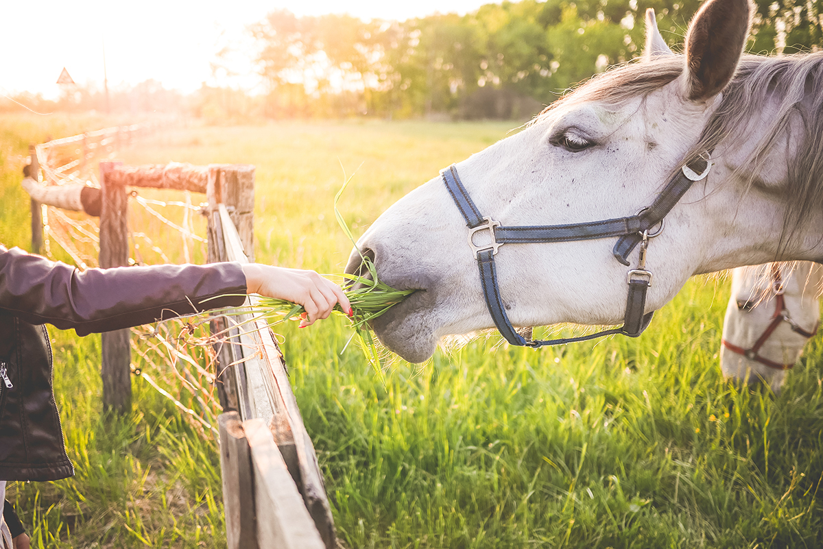 E squared Day Camp includes breakfast, lunch, interaction with horses, fishing, peer-sharing, and the opportunity to discover new personal strengths.