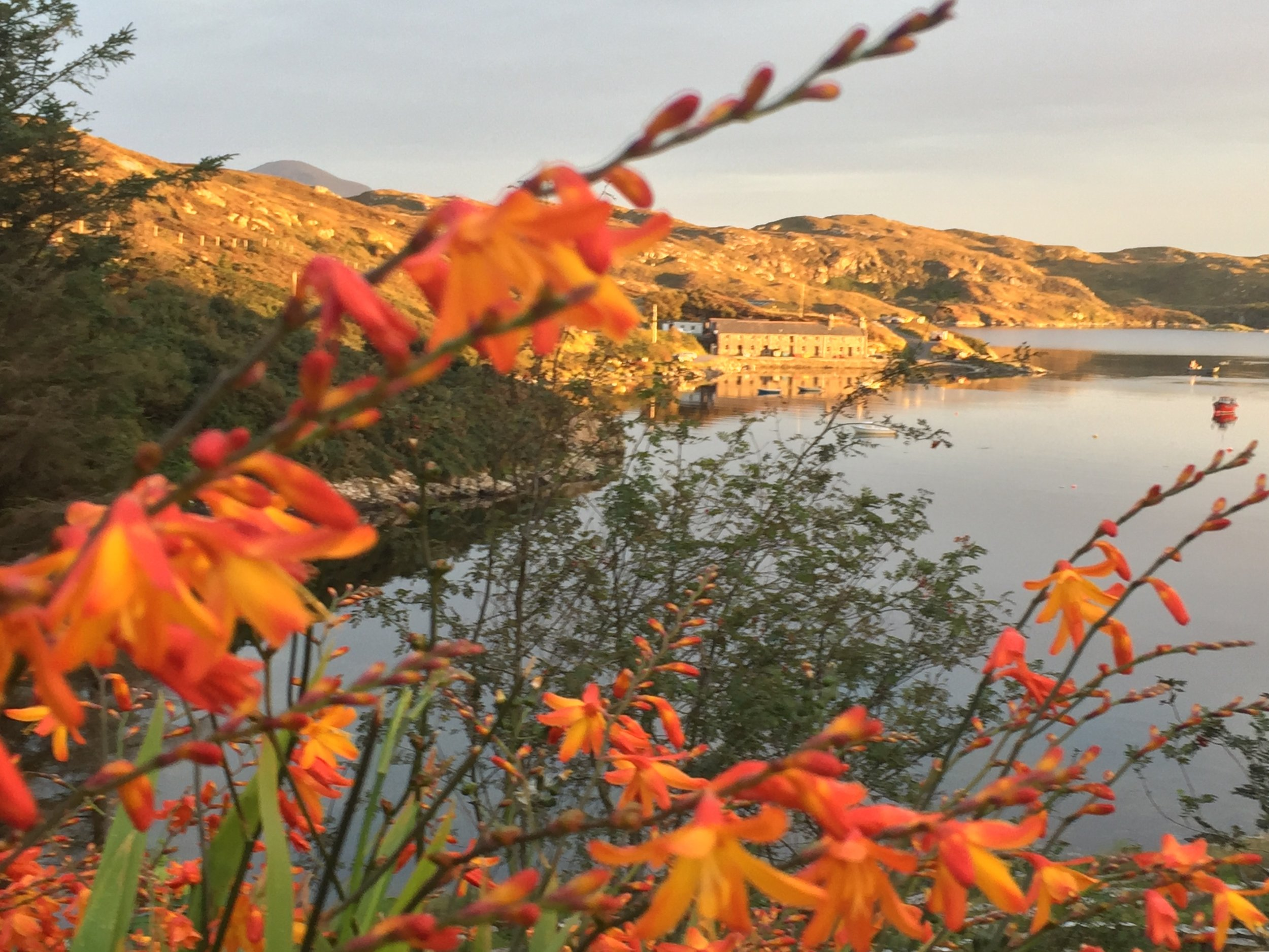Autumn flowers overlooking the bay.