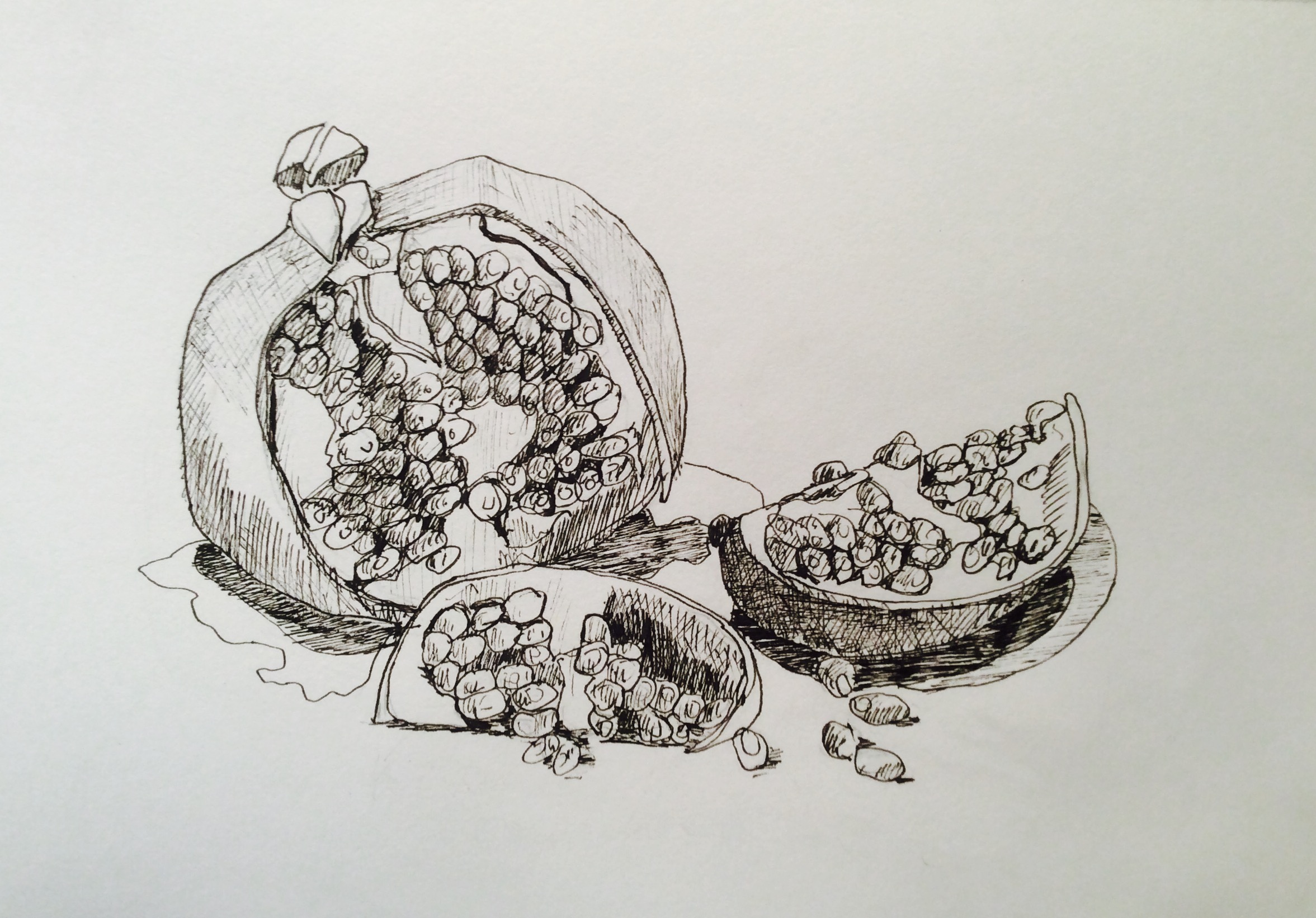 Pomegranate, ink on paper, daily drawing 11-12-16