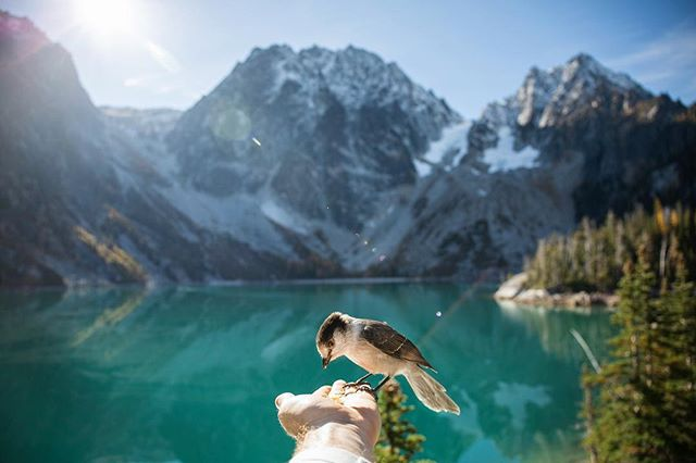 Feeding half your days rations to the birds of Colchuck Lake and the Enchantments. #forthebirds #colchucklake #enchantments #explorewa #alpinelakes #leavenworth #audobon #dragontailpeak #colchuck #stuartlake #pnwlife #pnwonderland #pnwcollective #bestofwashington #birdwatching #birdwatchers #landscapes #theenchantments #washingtonstate #bluelake #liked #followmeto #rei1440project #cascadiaexplored #explorewashington