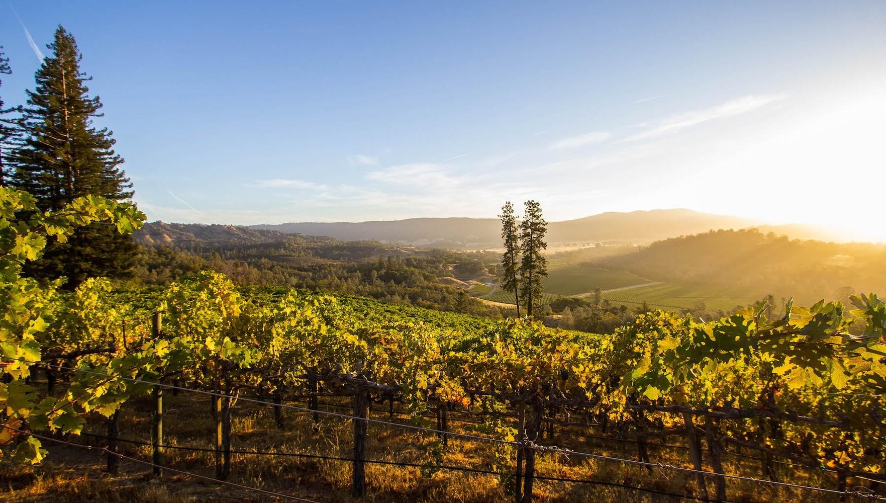 Michael Mondavi Family Estate - Heritage Block Vineyard