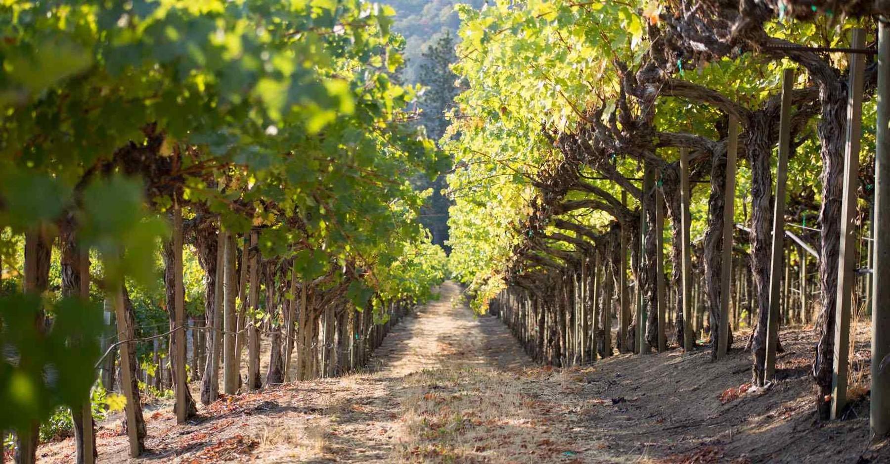 Michael Mondavi Family Estate - Oso Vineyard