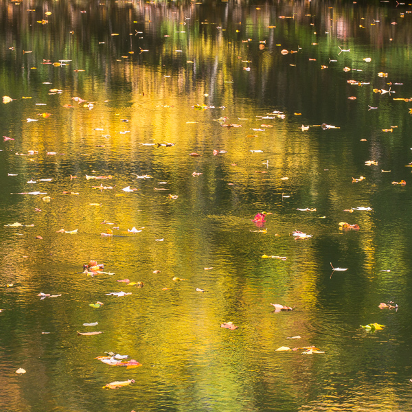 abstract photography, nature photography, outdoor photography, water reflection,
