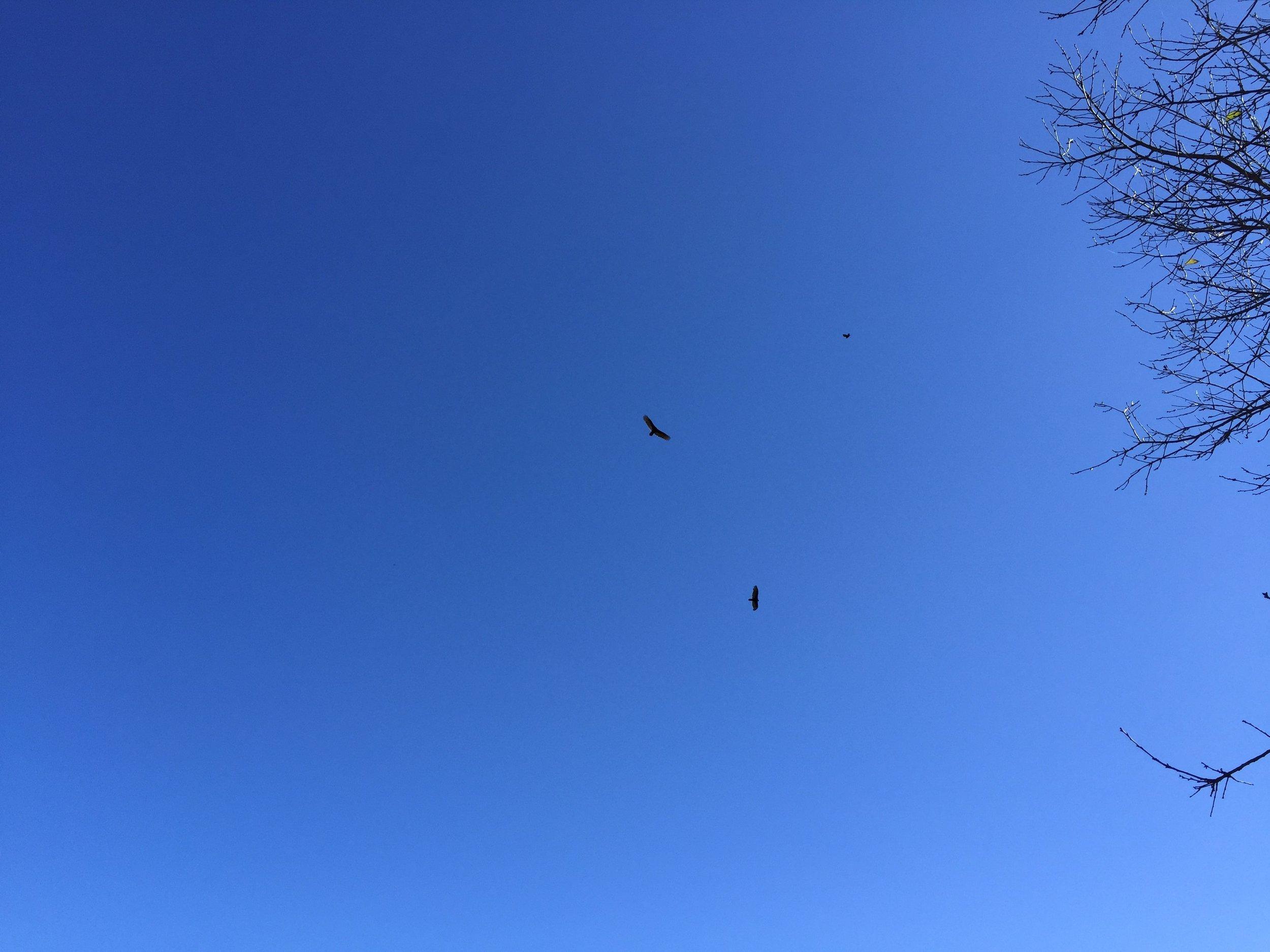 Vultures Circle Monticello