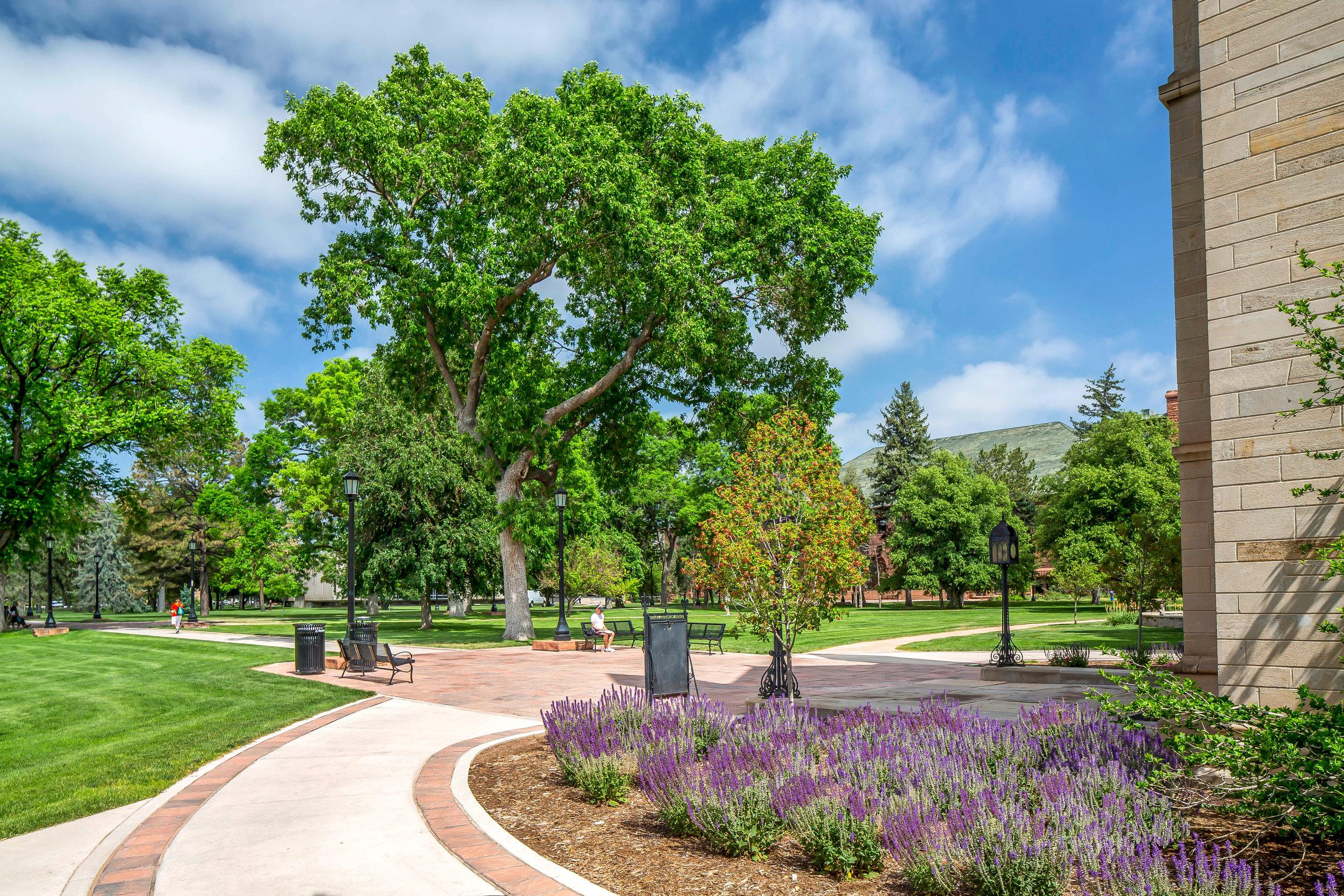 "<img src=""  studioINSITE_Colorado_College_CutlerHall  ""alt=""Long Range Development Plan, Historic Renovation, Science Building, Arts Center, Colorado Springs, Colorado, Colorado, College,  Landscape Architecture, Urban Design, Master Planning, studioINSITE  "" title=""Colorado College""/>"
