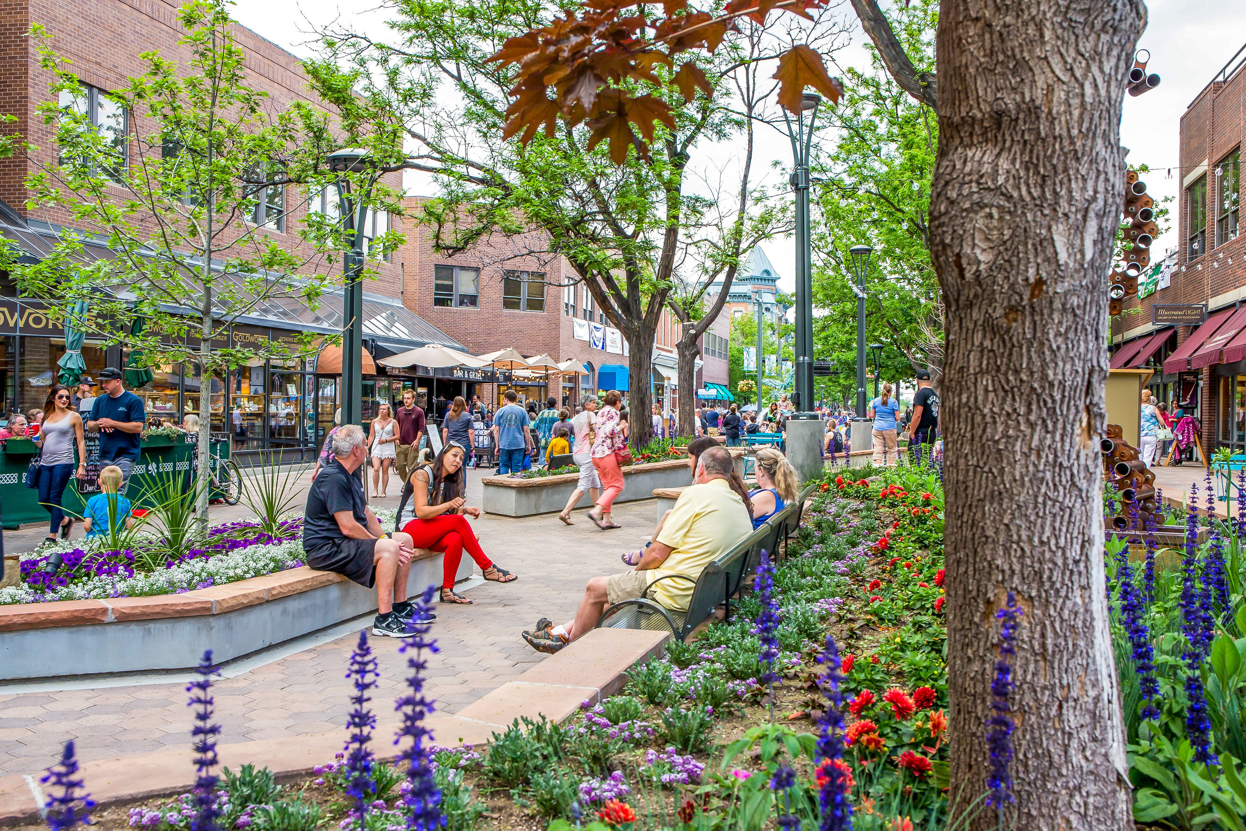 Old_Town_Square_Forest-edit (1 of 1).jpg