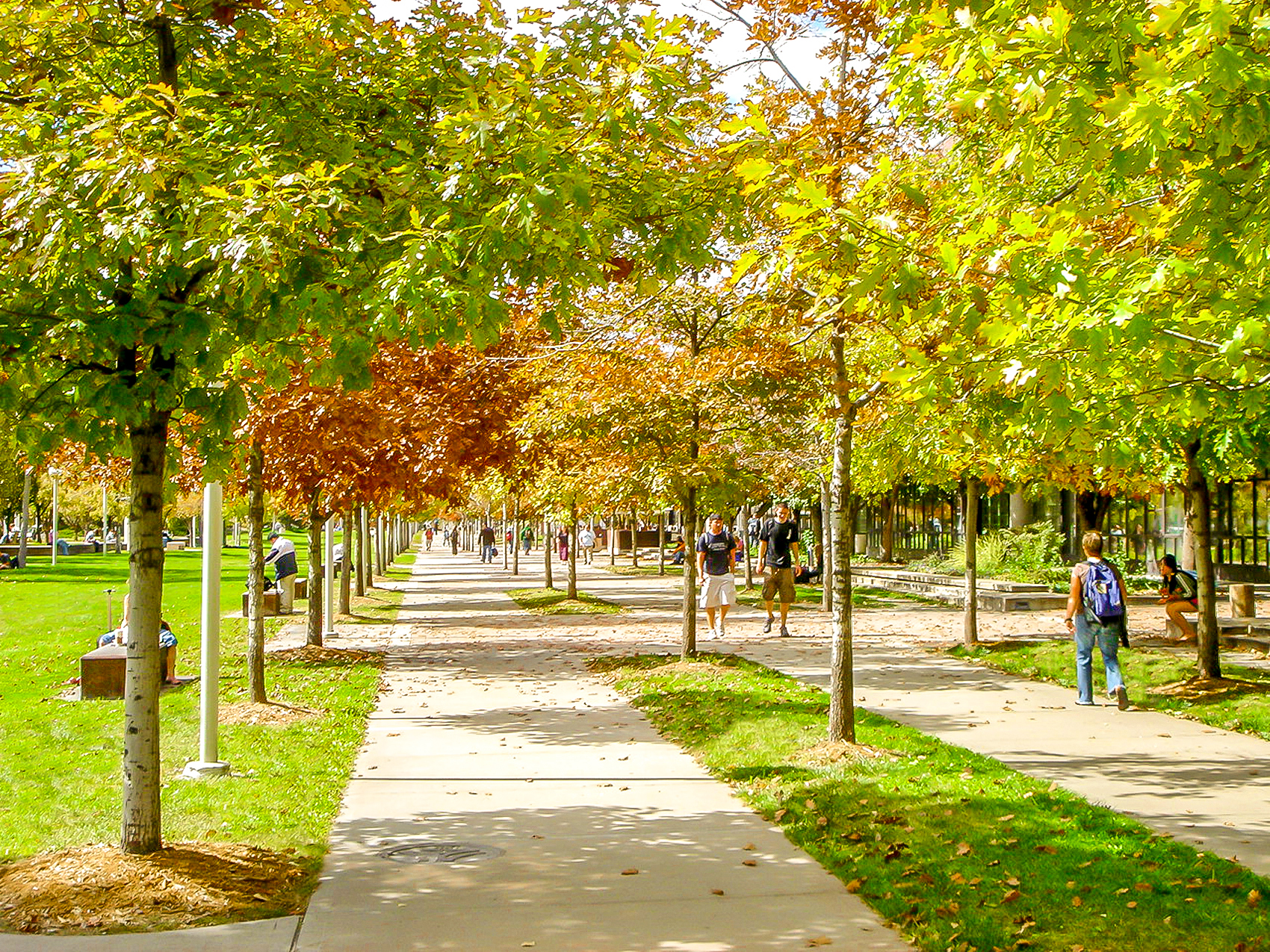 "<img src="" studioINSITE_Auraria_Higher_Education_Fall "" alt=""Campus Master Plan, Science Building, Student Union, Athletic Facility, Urban Campus, Pedestrian Mall, Landscape Architecture, Auraria, Denver, CO  "" title=""Auraria Higher Education Center""/>"