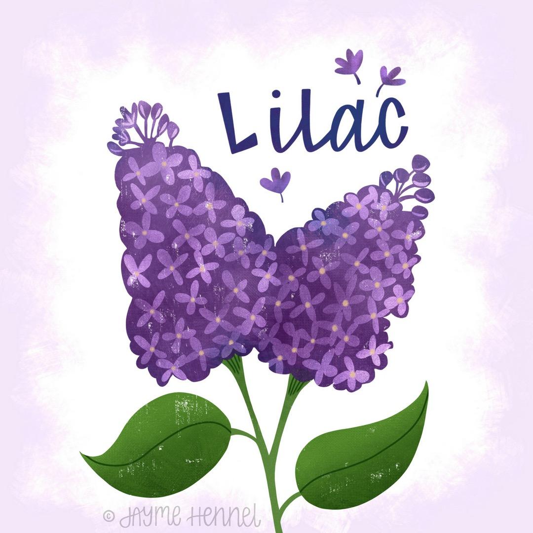 2-lilac.JPG
