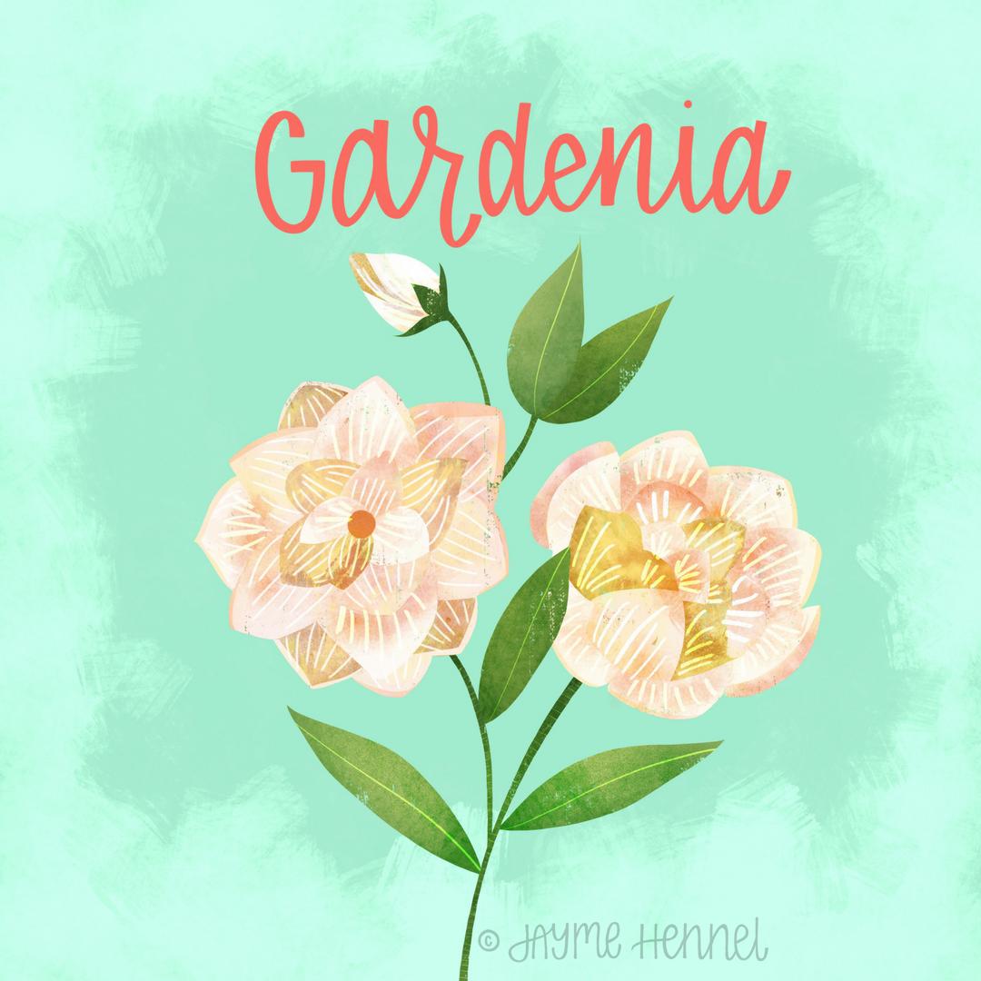 6-gardenia.PNG