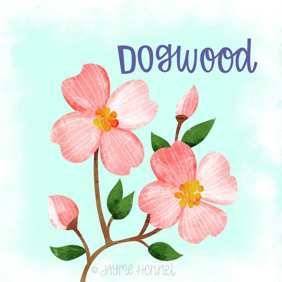 16-dogwood.JPG