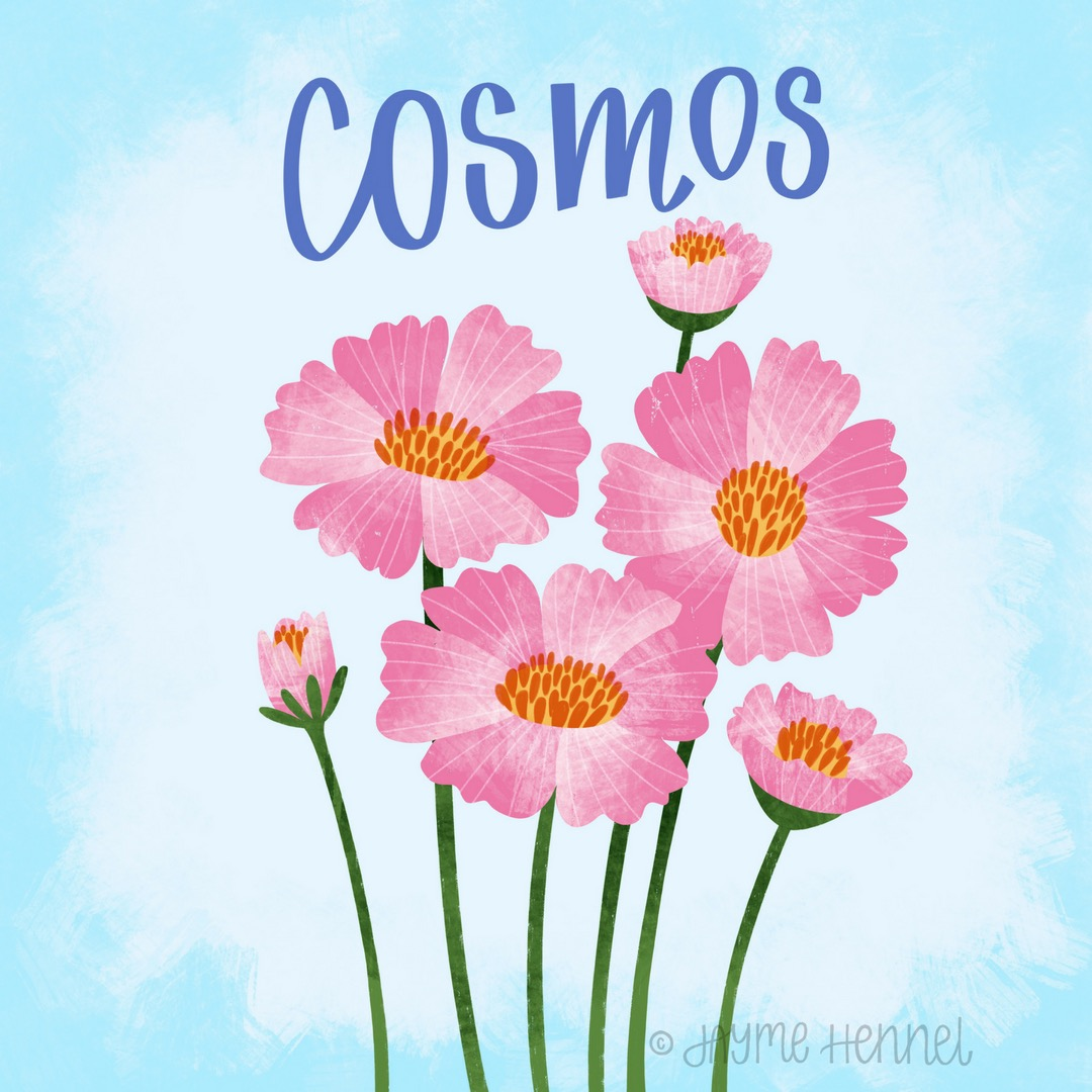 17-cosmos.JPG