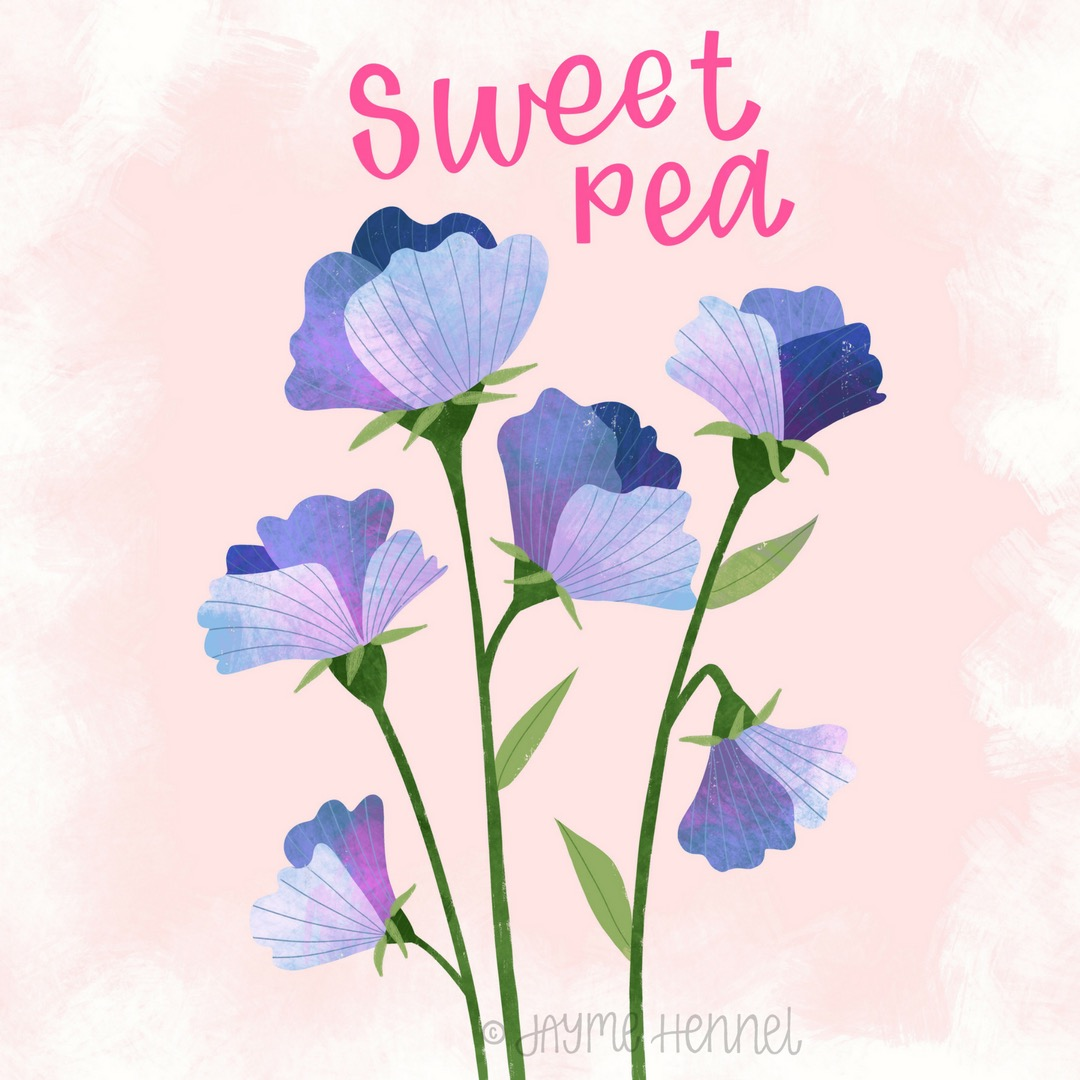 18-sweet pea.JPG
