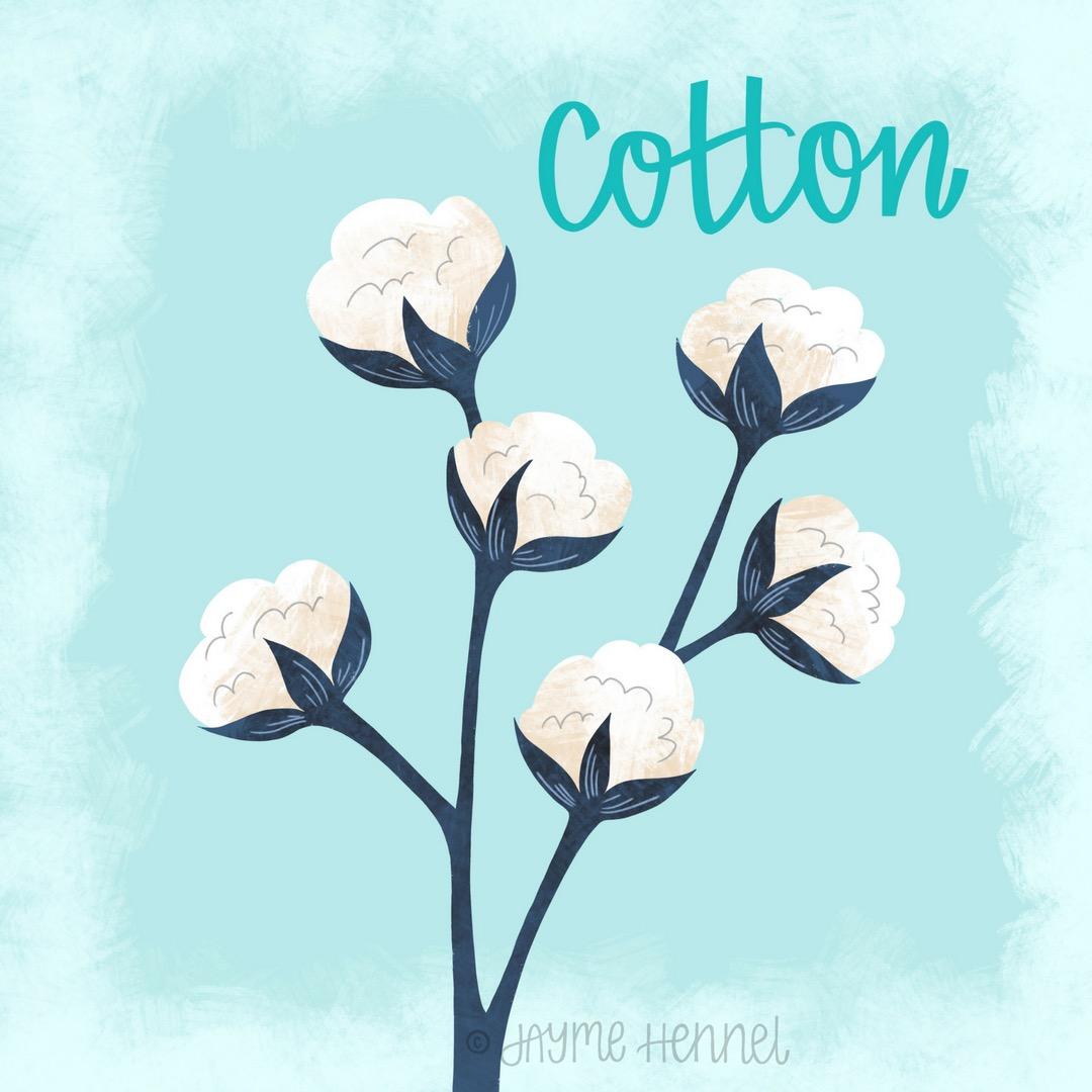 22-cotton.JPG