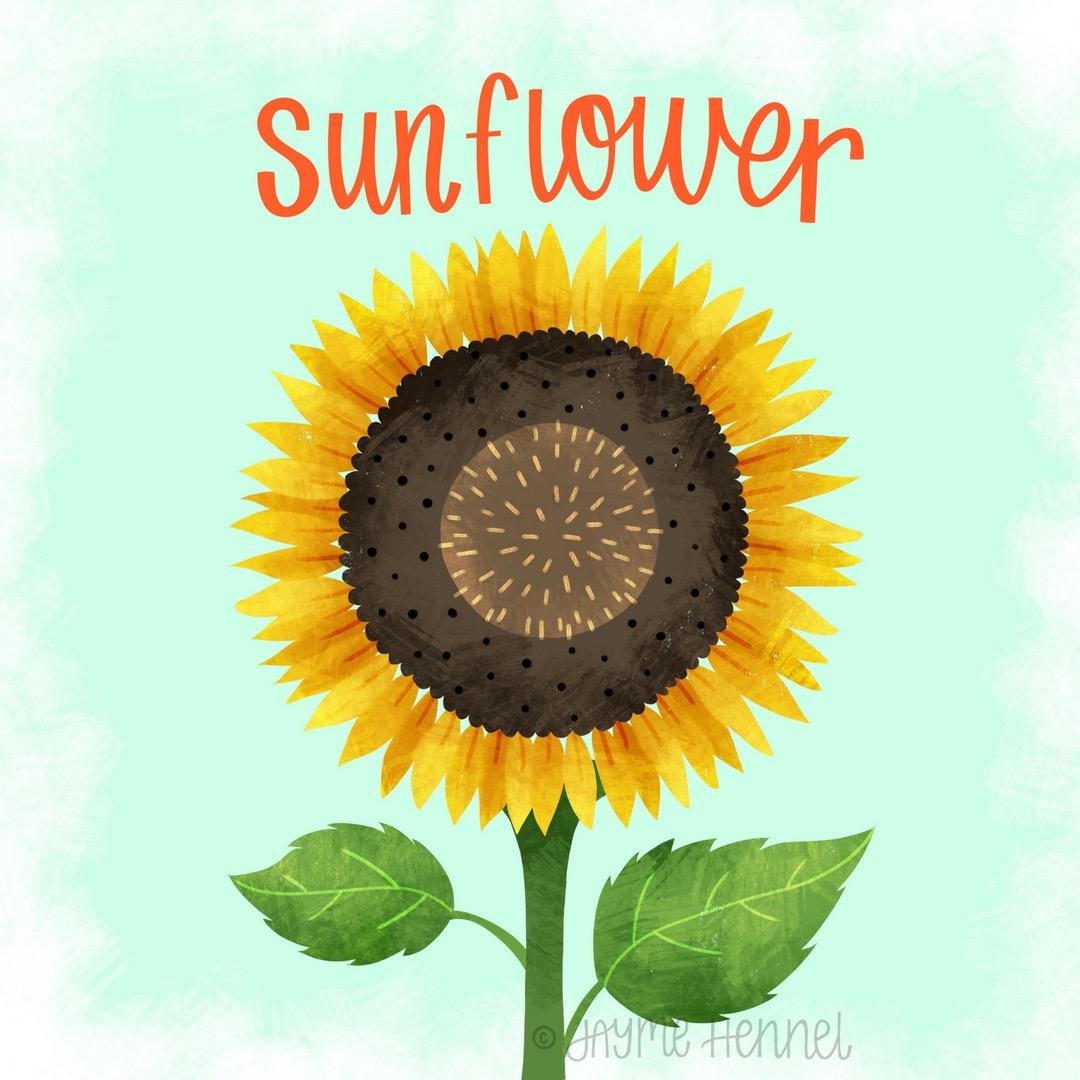 24-sunflower.JPG