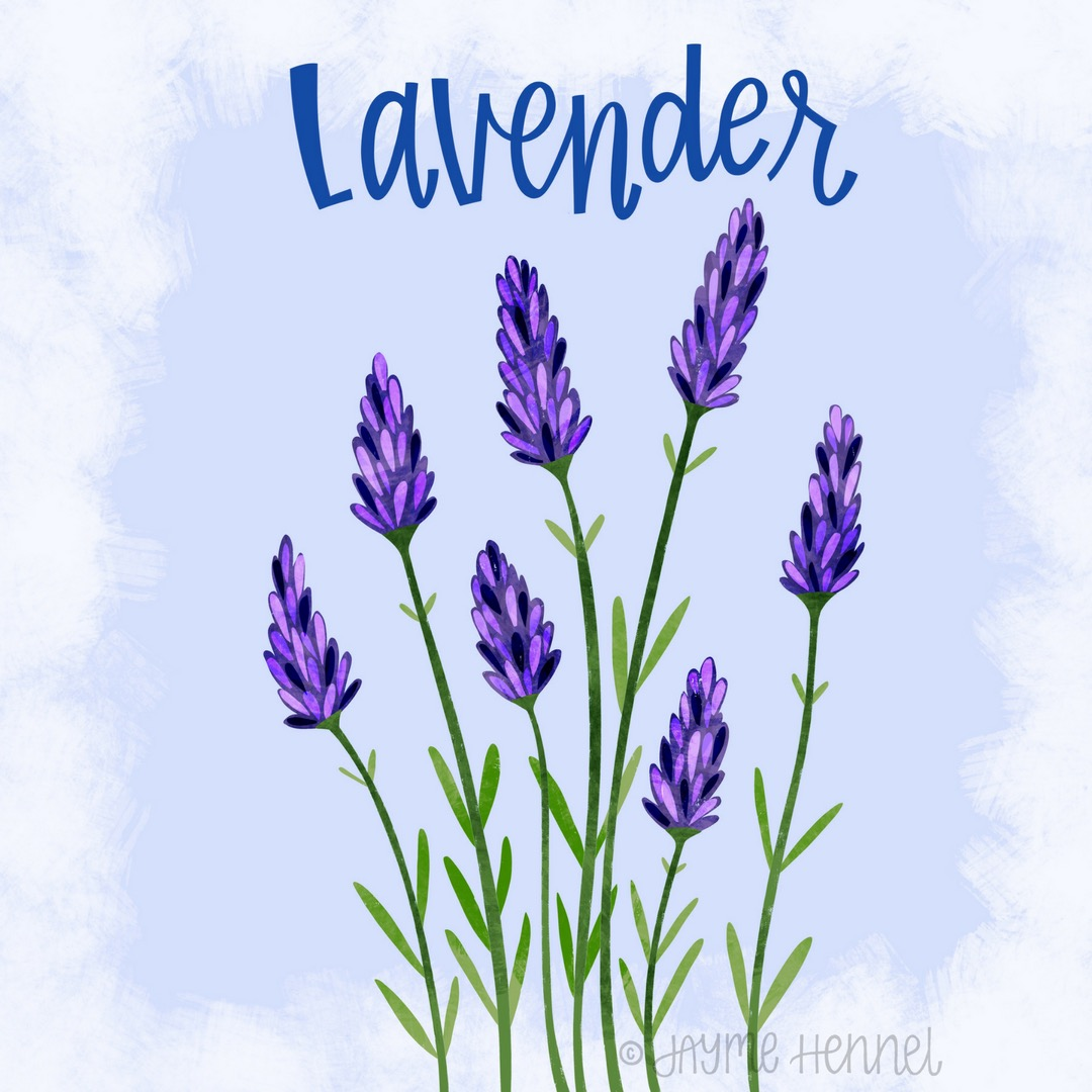 25-lavender.JPG