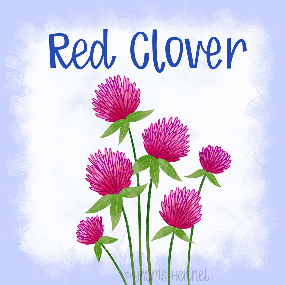 28-red clover.JPG