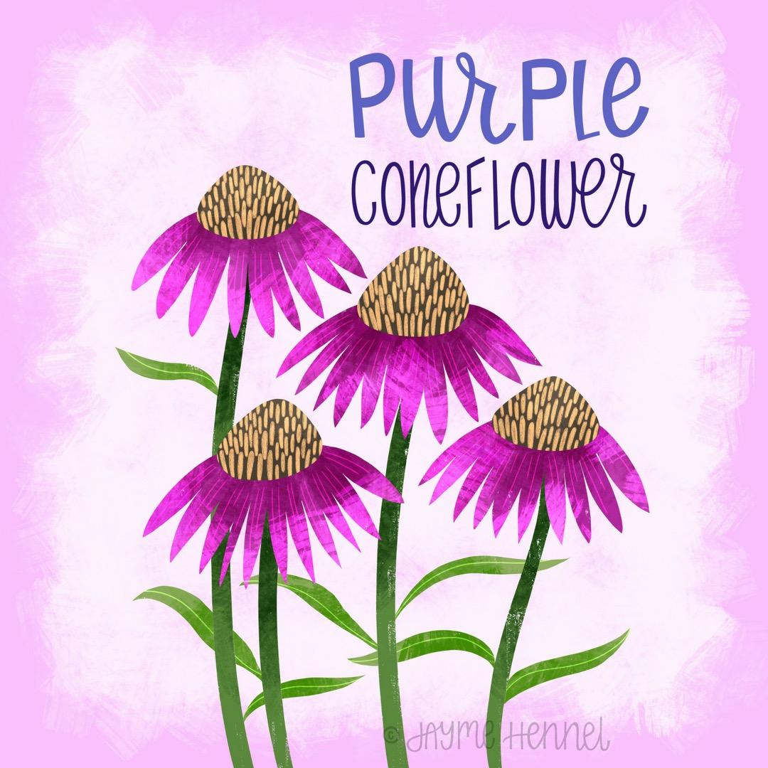 29- purple coneflower.JPG