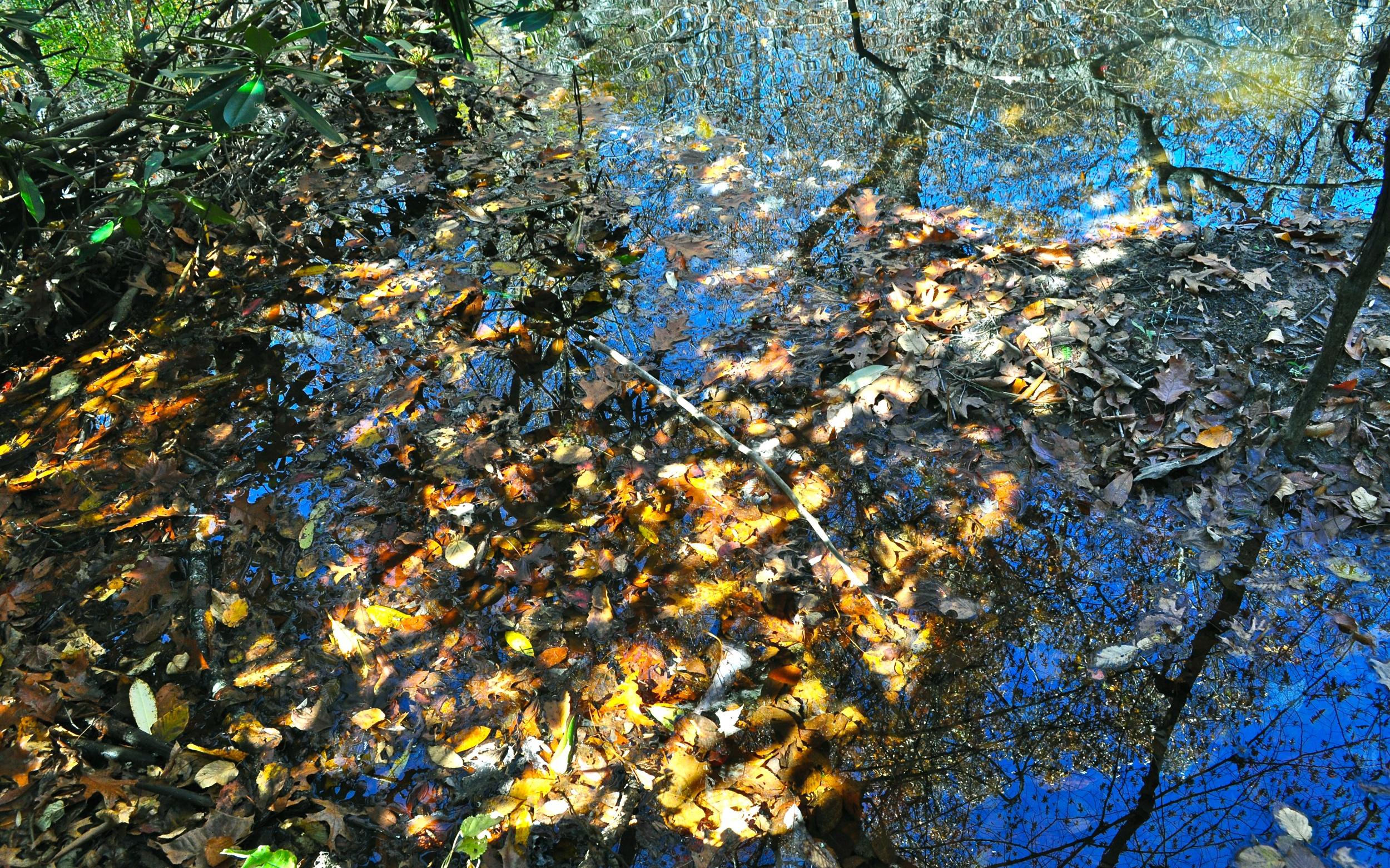 Crabtree Creek October