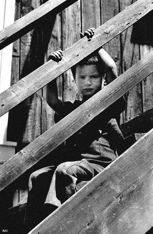 Young boy observing - Gaspé, 1954