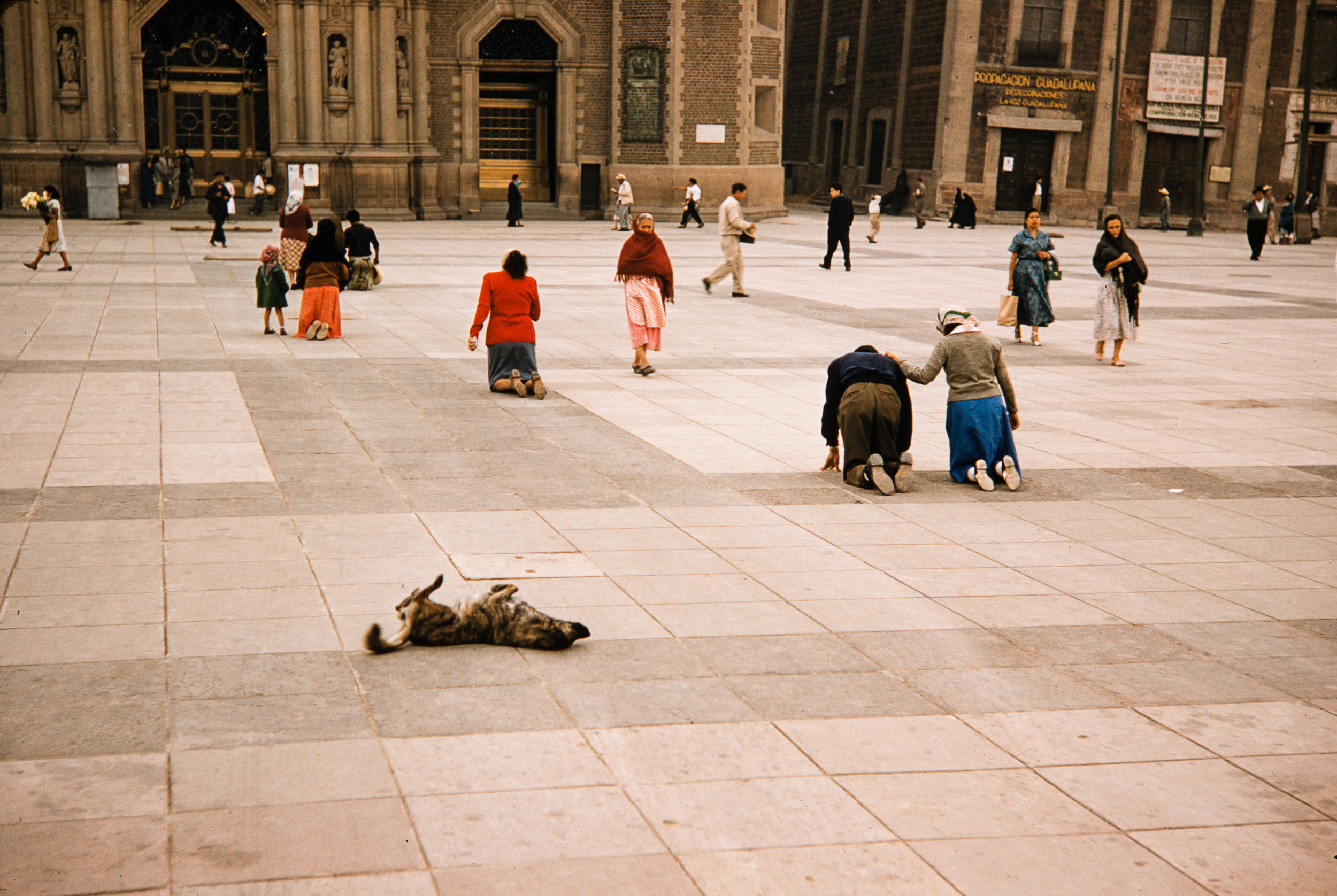 Dog on back in church plaza, Mexico, 1957