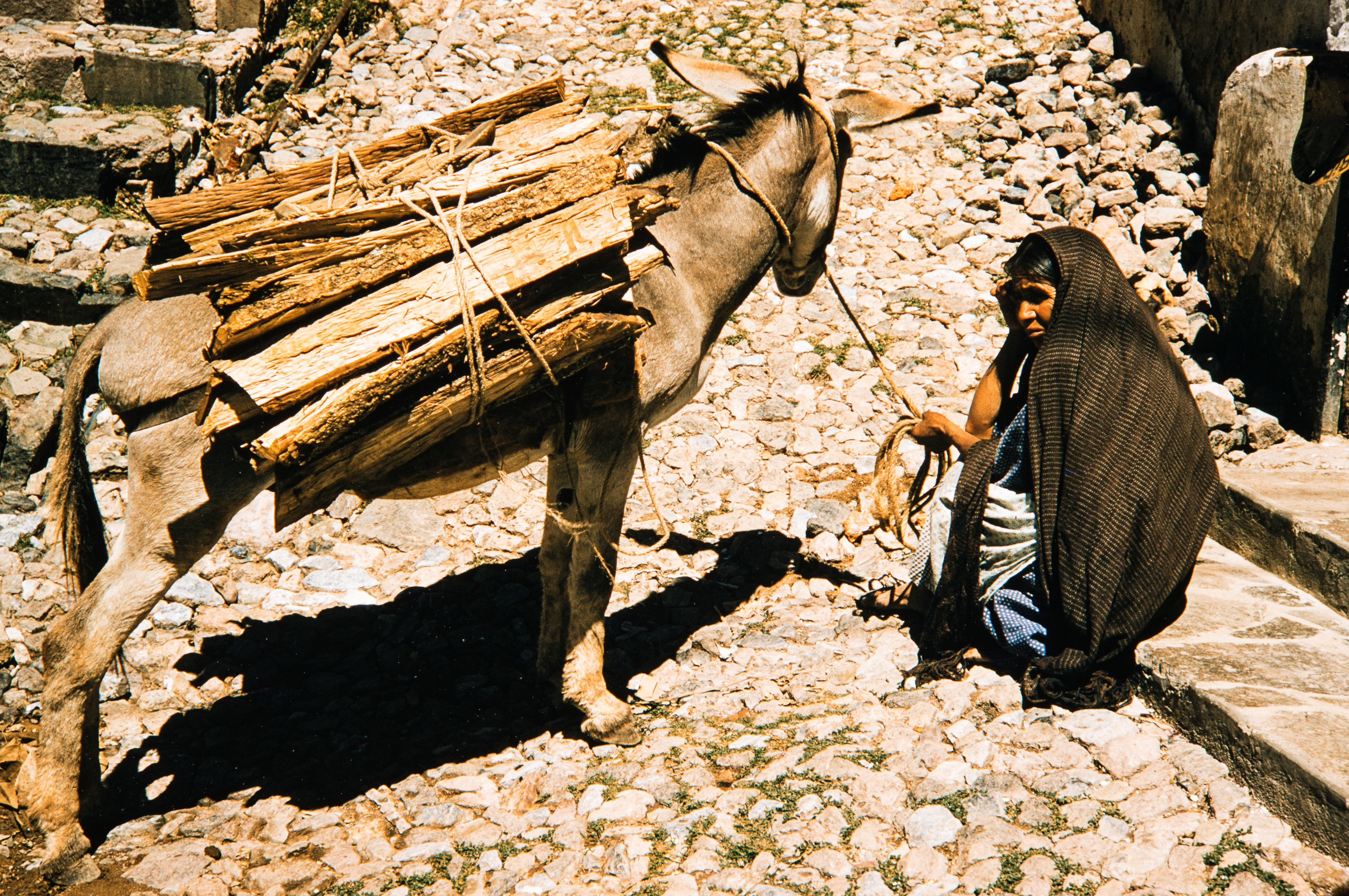 Woman on cobblestone with donkey, Mexico, 1957