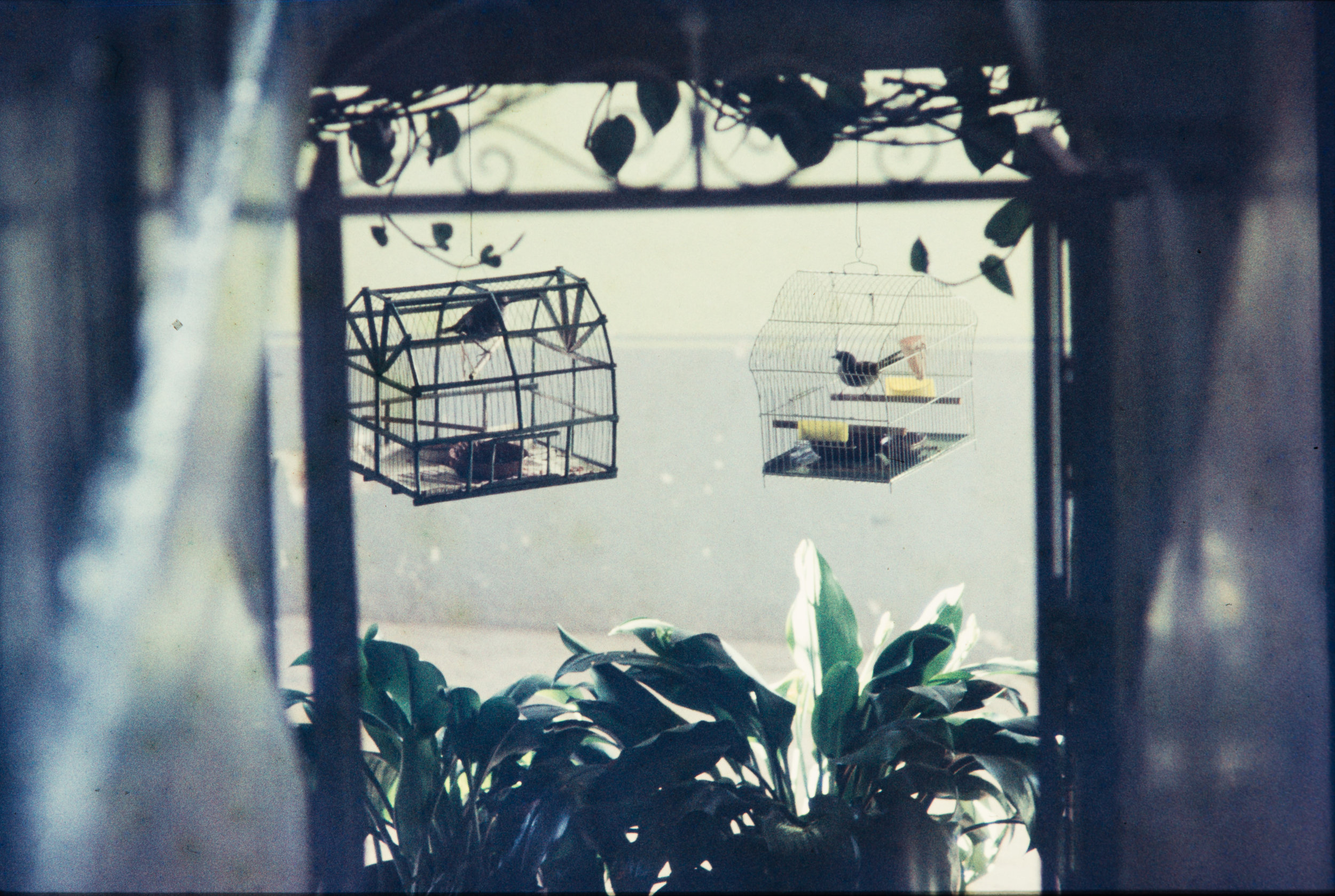Two bird cages, Mexico, 1957