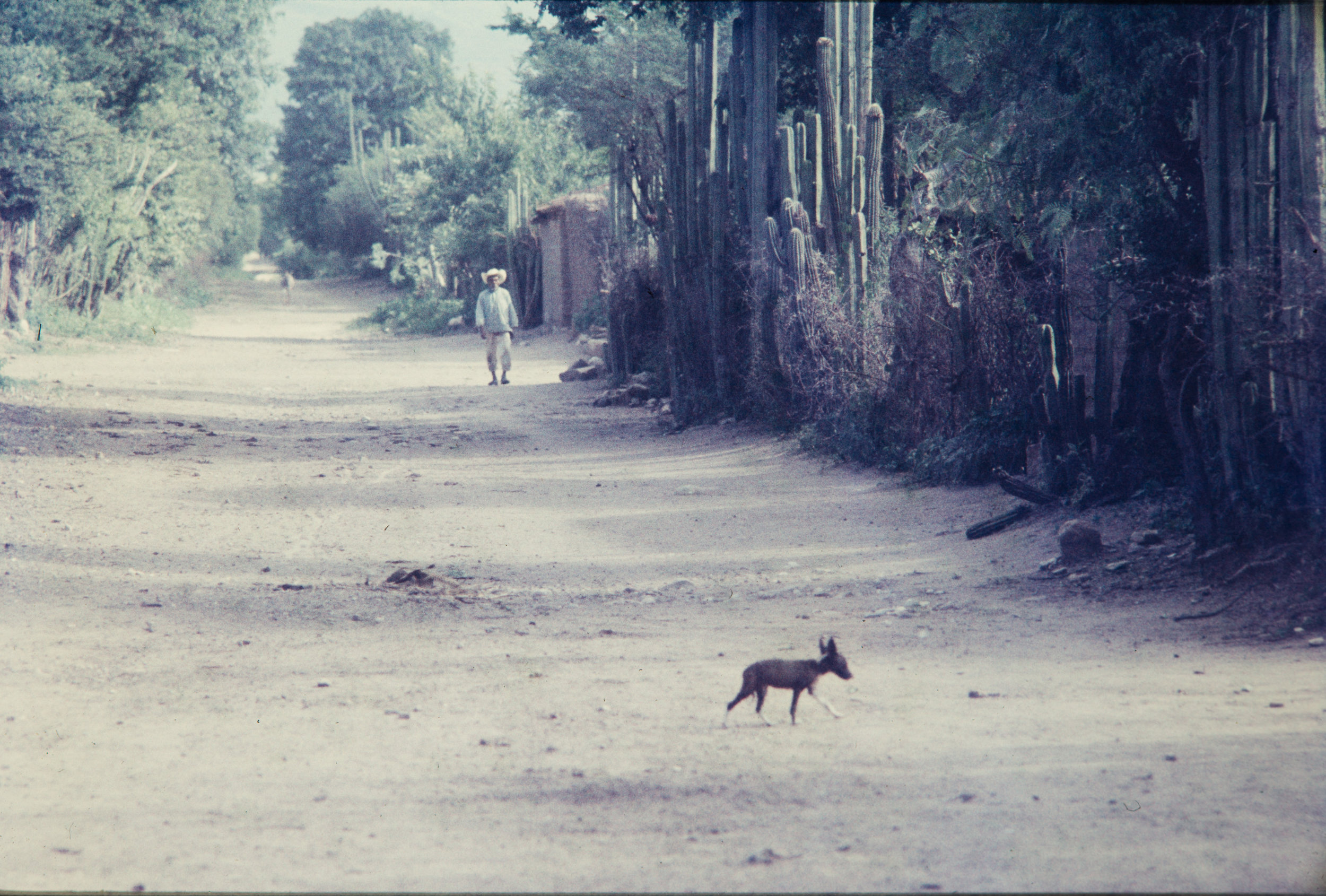 Man and dog walking, Mexico, 195