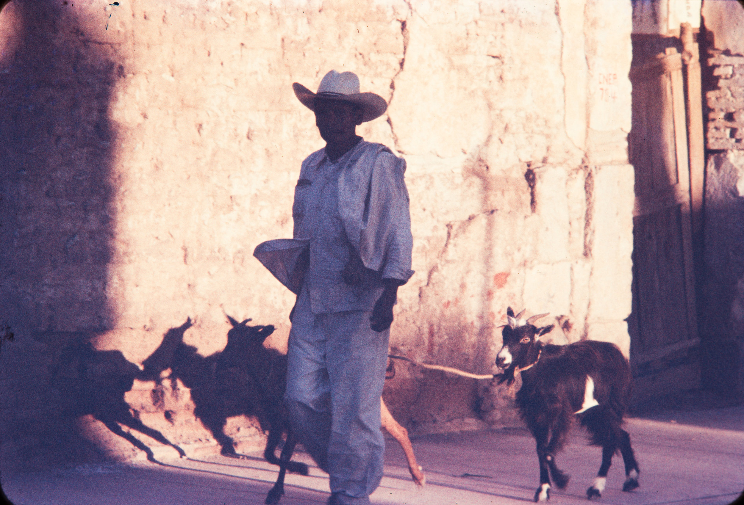 Man with goats, Mexico, 1957