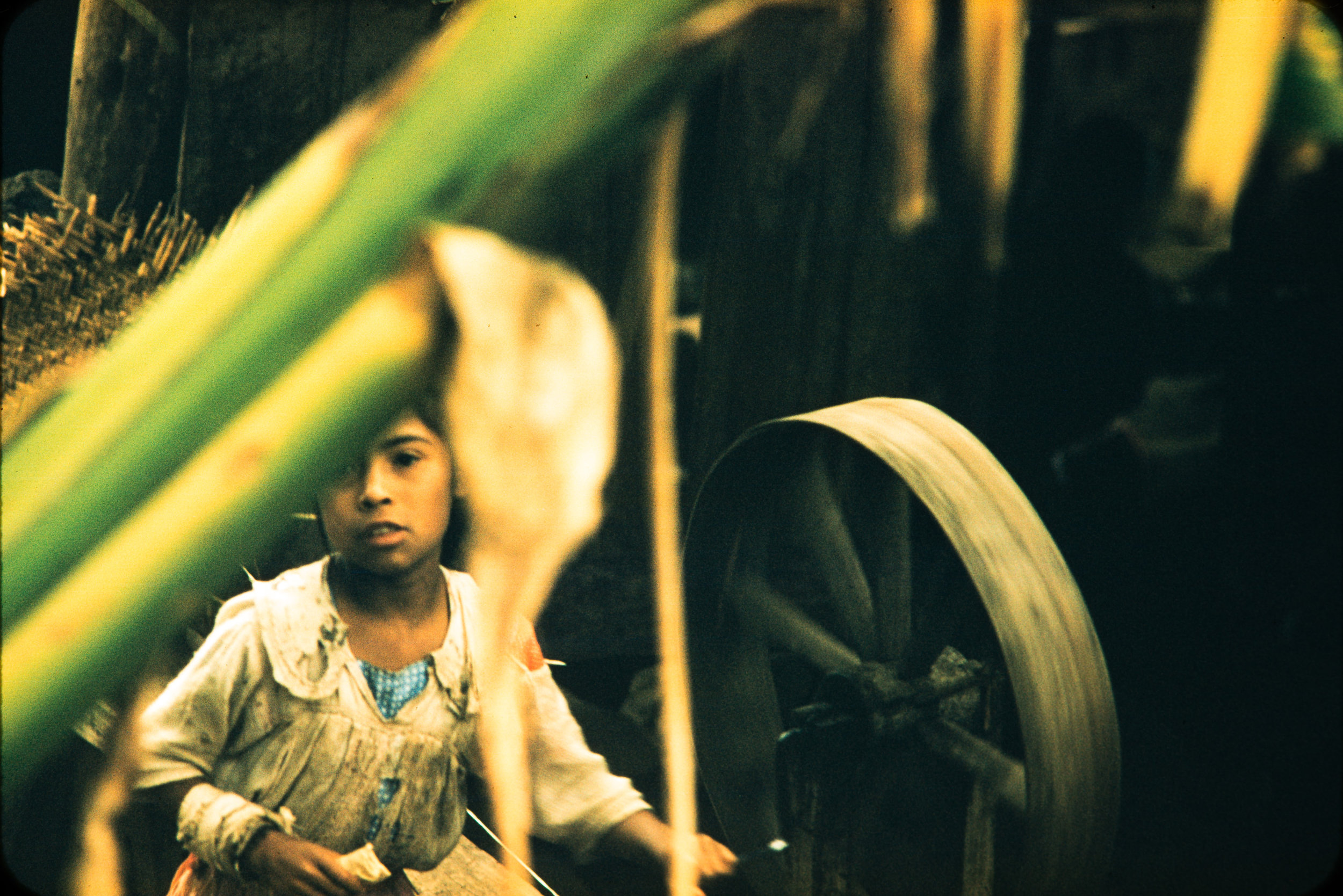 Boy behind plant with wheel, Mexico, 1957